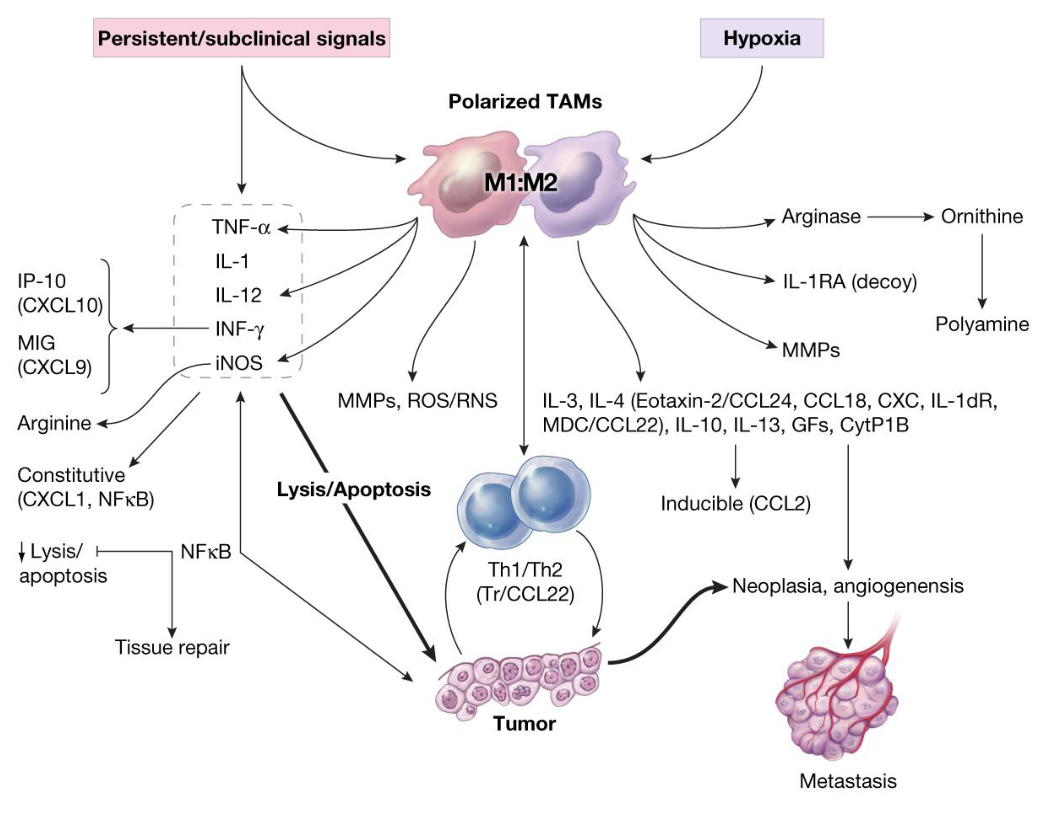 Cancers | Free Full-Text | Chronic Inflammation: Synergistic