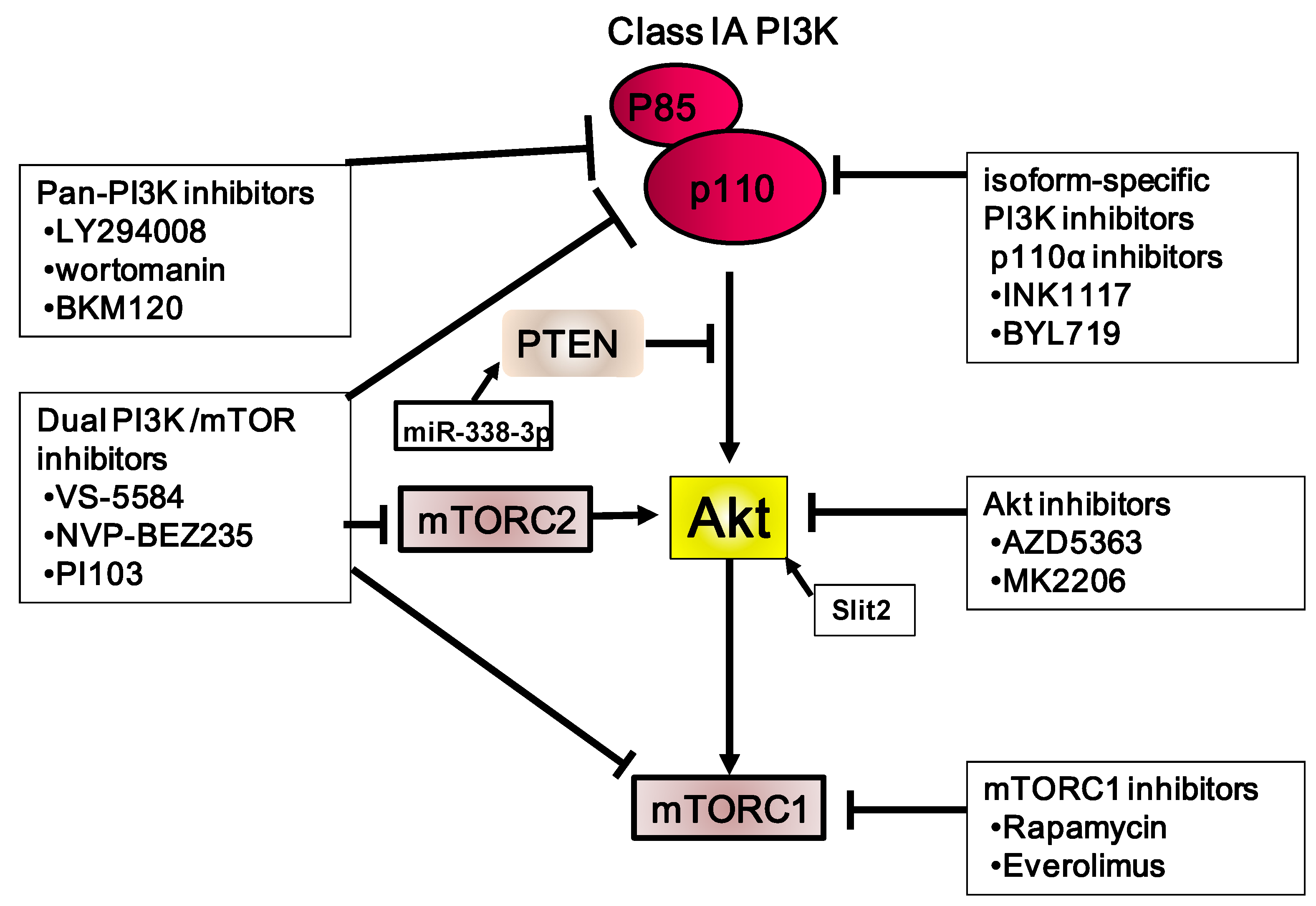 Cancers Free Full Text The Role Of Pi3k Akt Mtor
