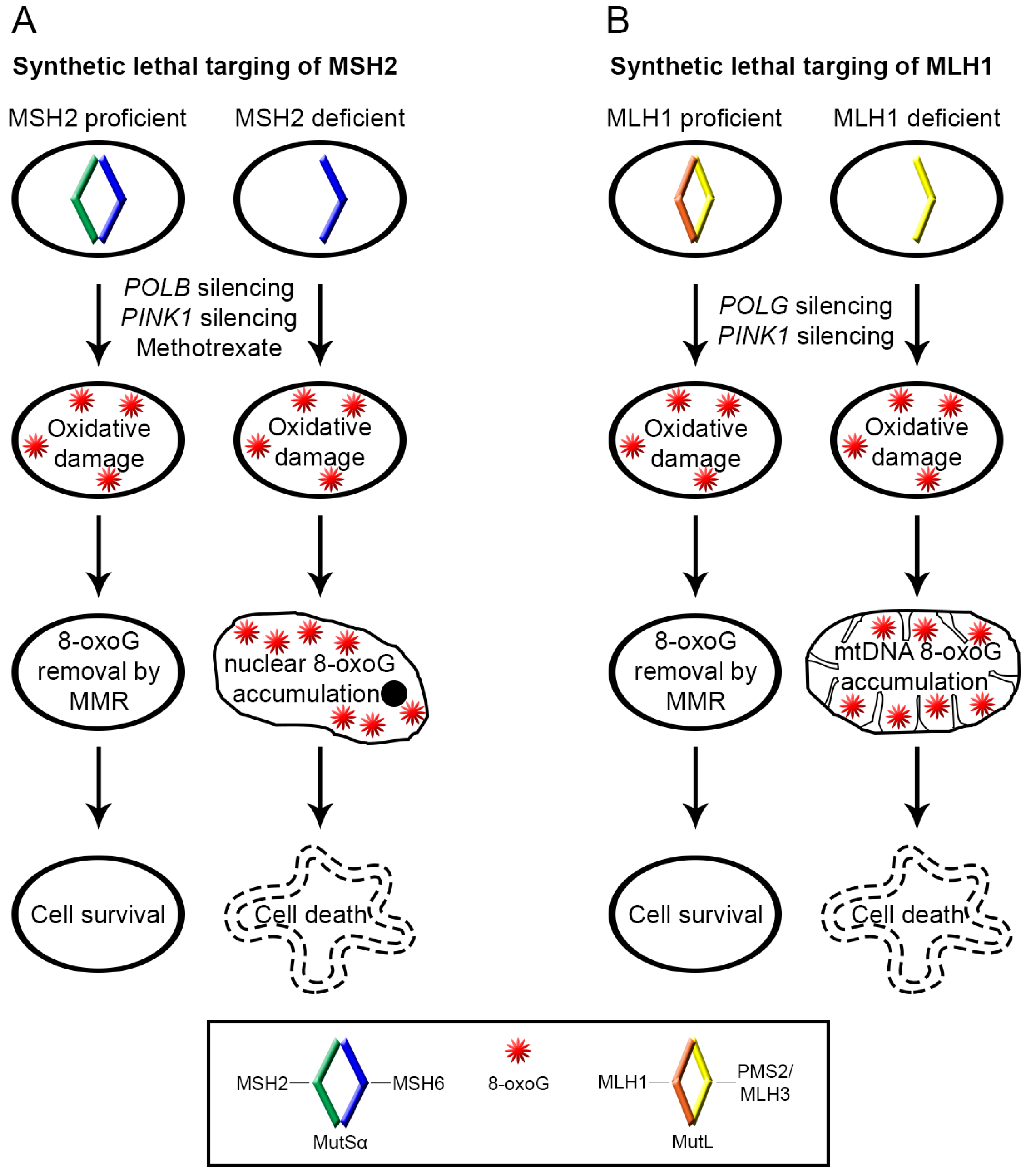 role of oxidative modifications in atherosclerosis pdf