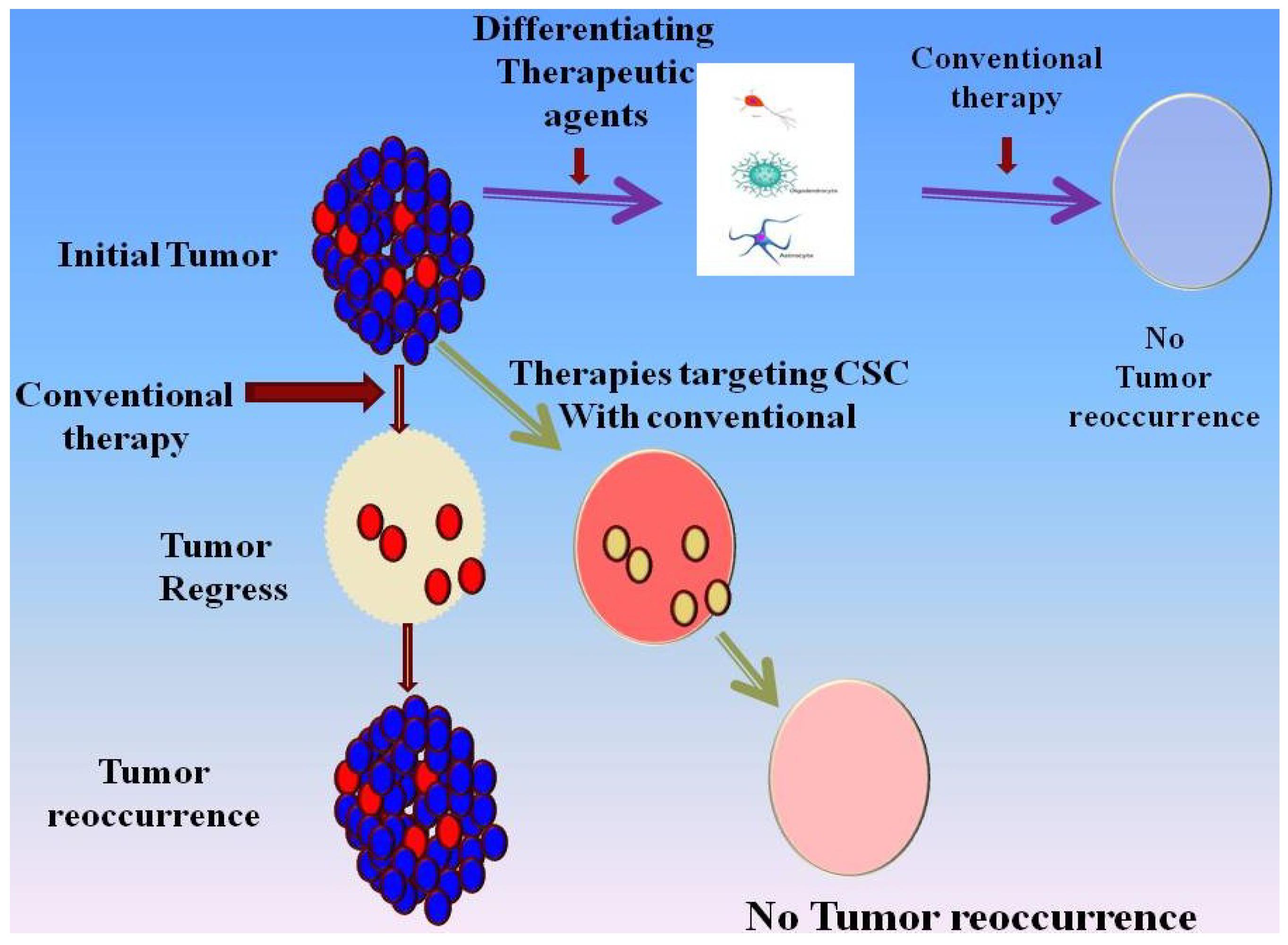 Cancers | Free Full-Text | Glioblastoma: Molecular ...