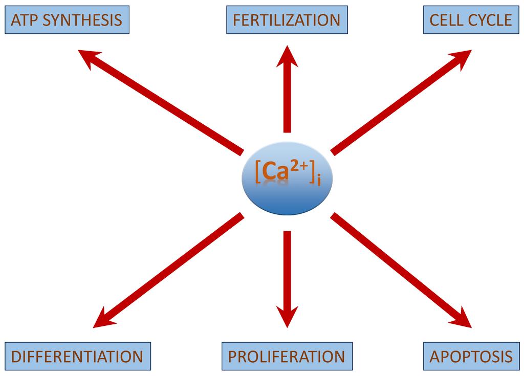 Essay on Calcium: 5 Essays on Calcium
