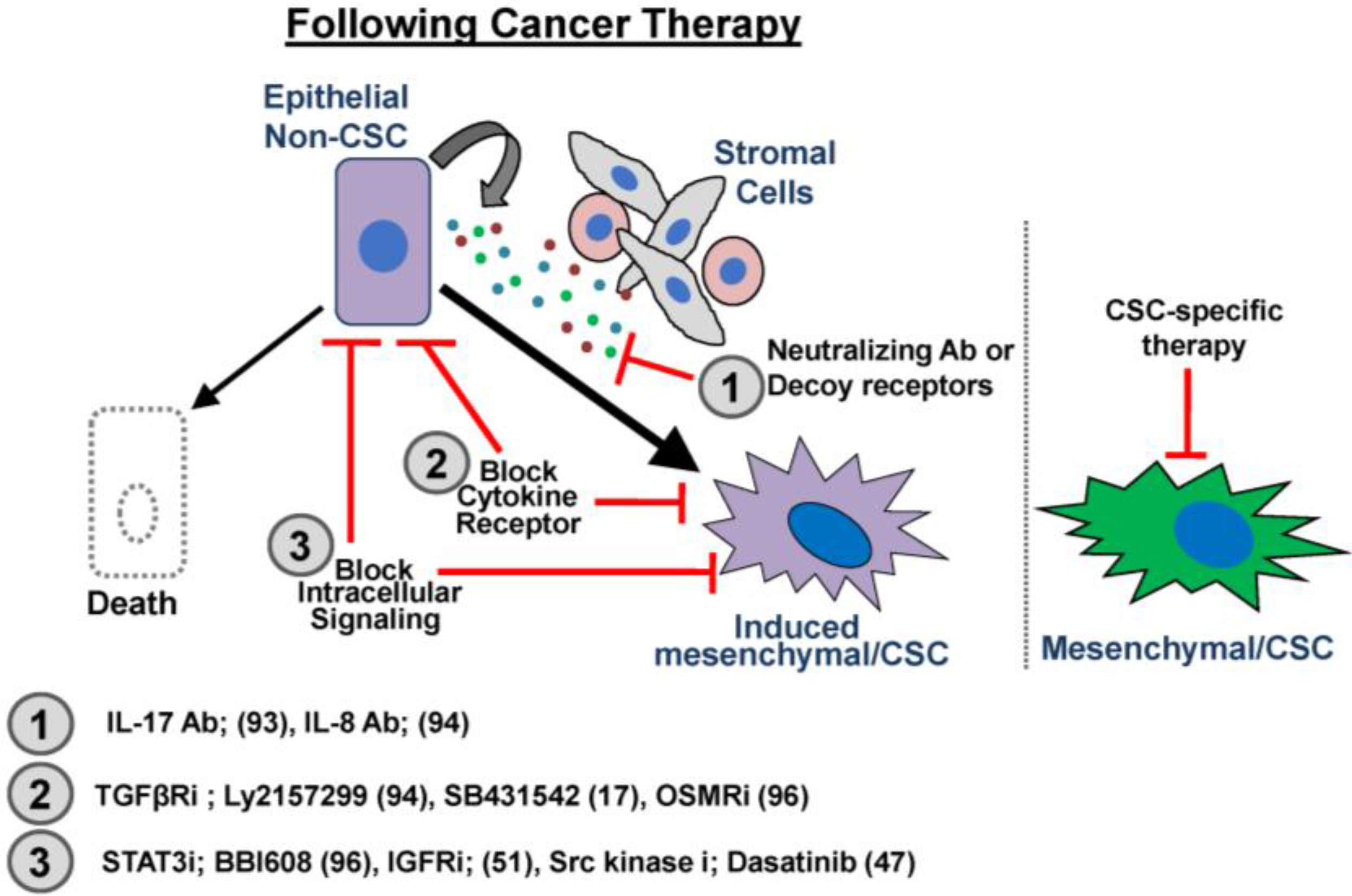 Cancers Free Full Text Cancer Stem Cell Plasticity