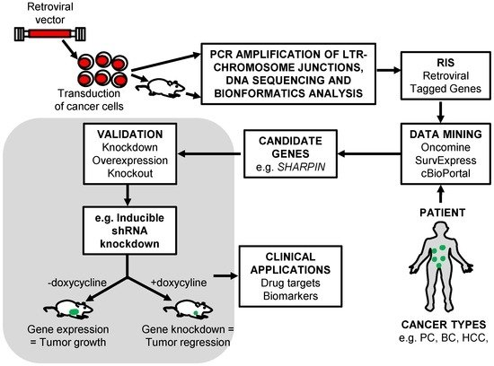 Identifying Cancer Driver Genes Using Replication-Incompetent Retroviral Vectors