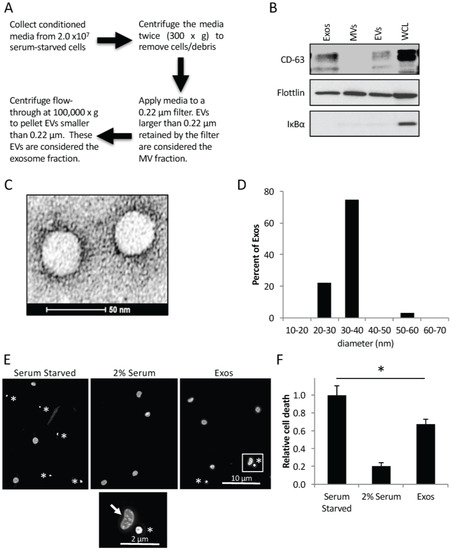 The Enrichment of Survivin in Exosomes from Breast Cancer Cells Treated with Paclitaxel Promotes Cell Survival and Chemoresistance