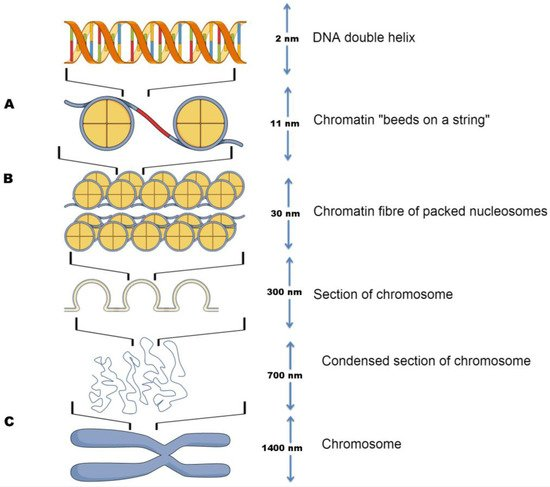 Circulating Nucleosomes and Nucleosome Modifications as Biomarkers in Cancer