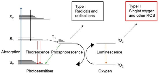 Oncologic Photodynamic Therapy: Basic Principles, Current Clinical Status and Future Directions