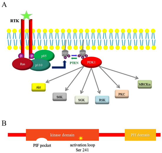 Serine-Threonine Kinase 3-Phosphoinositide-Dependent Protein Kinase-1 PDK1 as a Key Regulator of Cell Migration and Cancer Dissemination