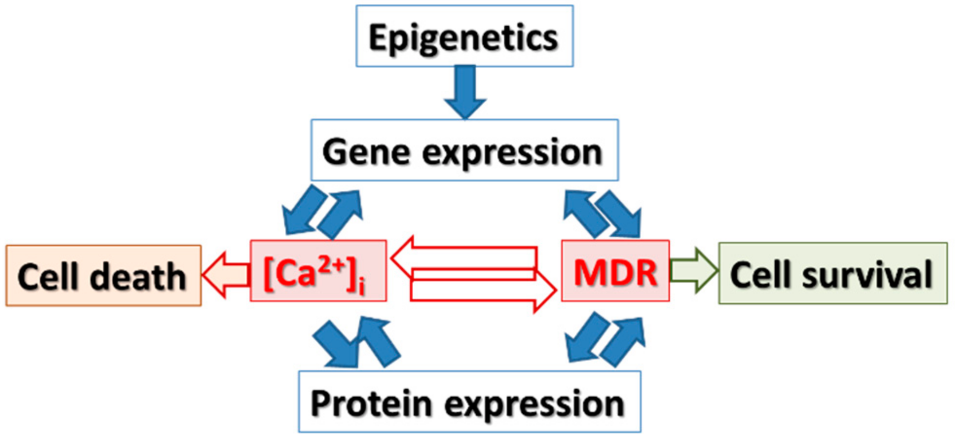 Cancers | Free Full-Text | Targeting Intracellular Calcium Signaling ...
