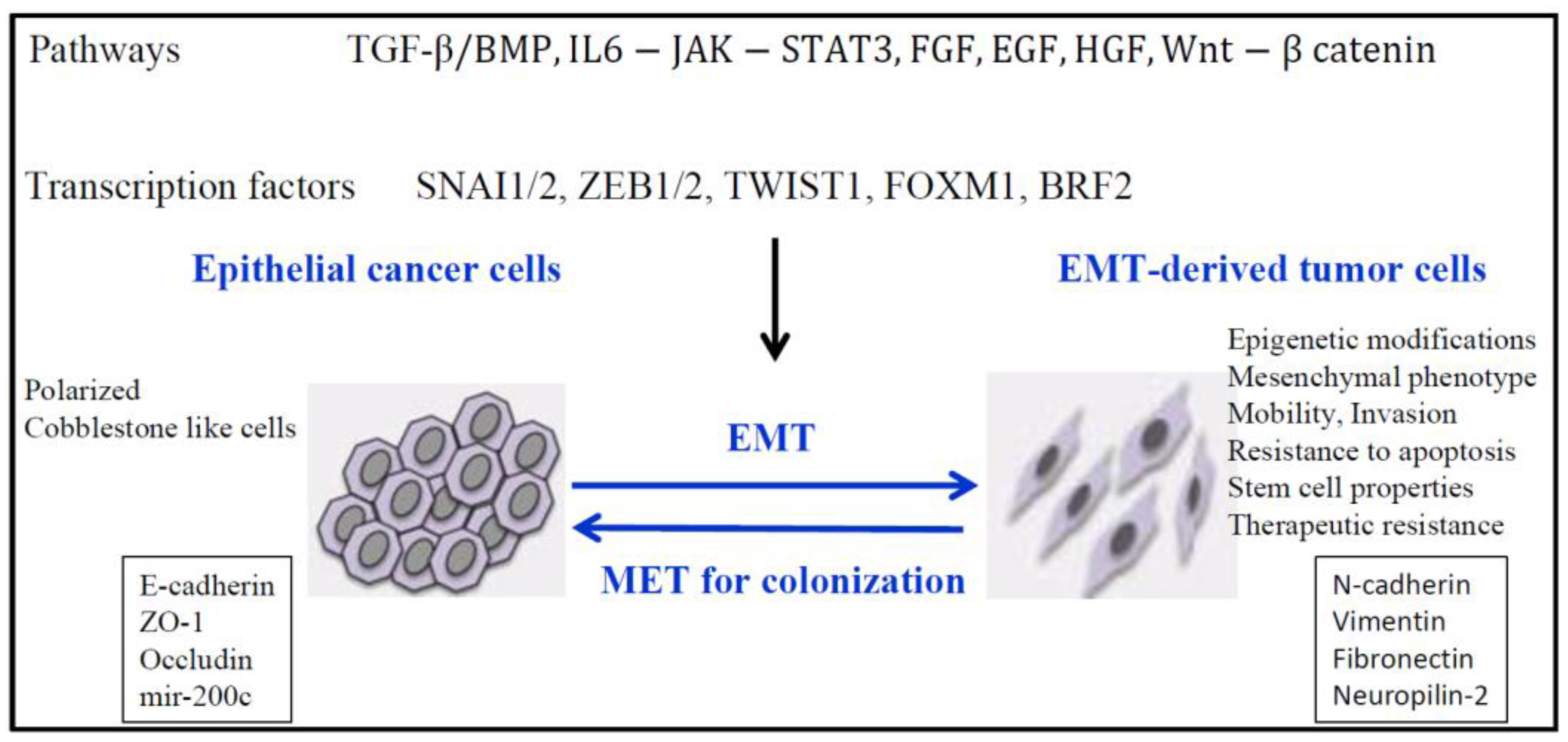 Cancers Free Full Text Epigenetic Regulation Of The