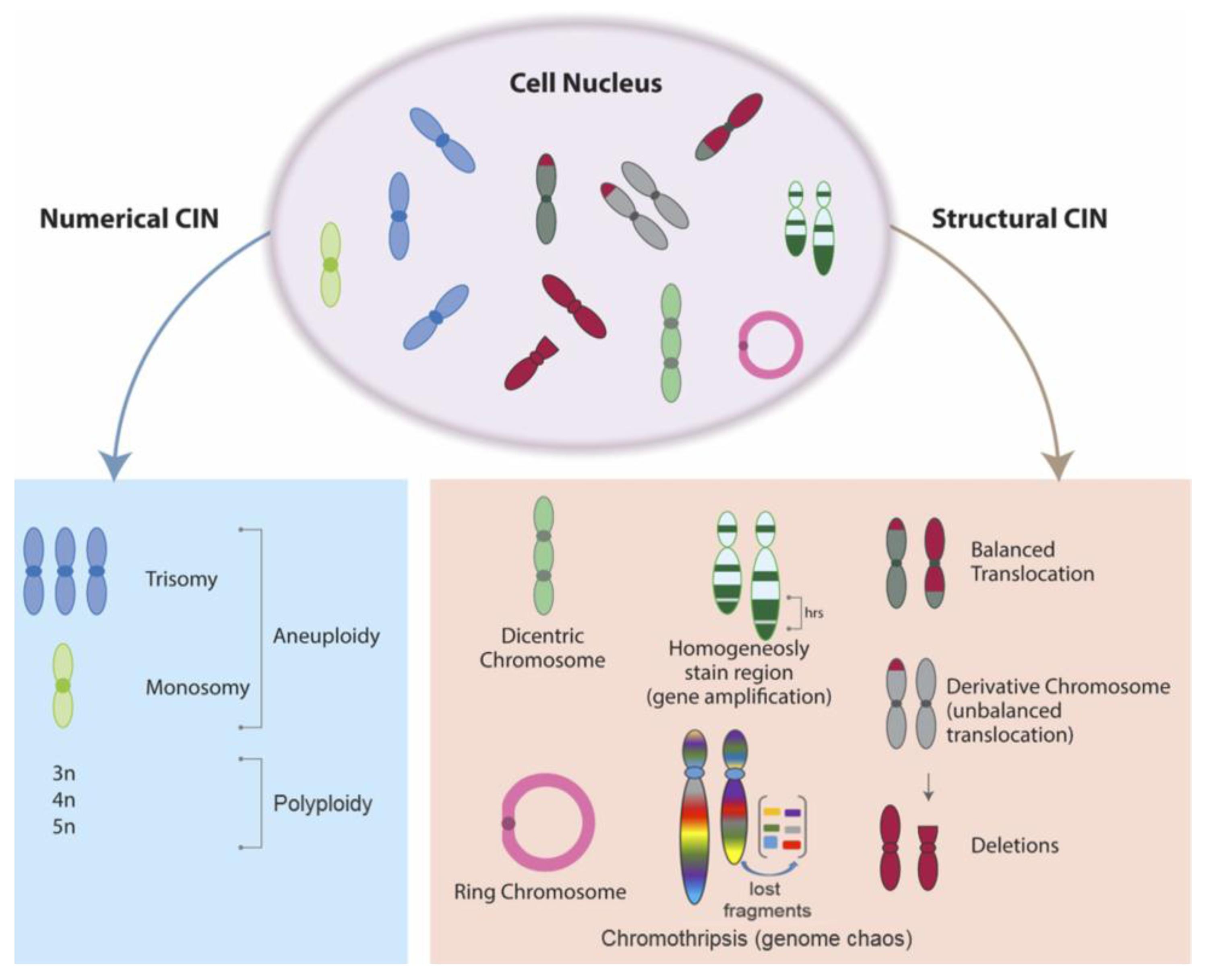 Cancers | Free Full-Text | The Role of Chromosomal Instability in
