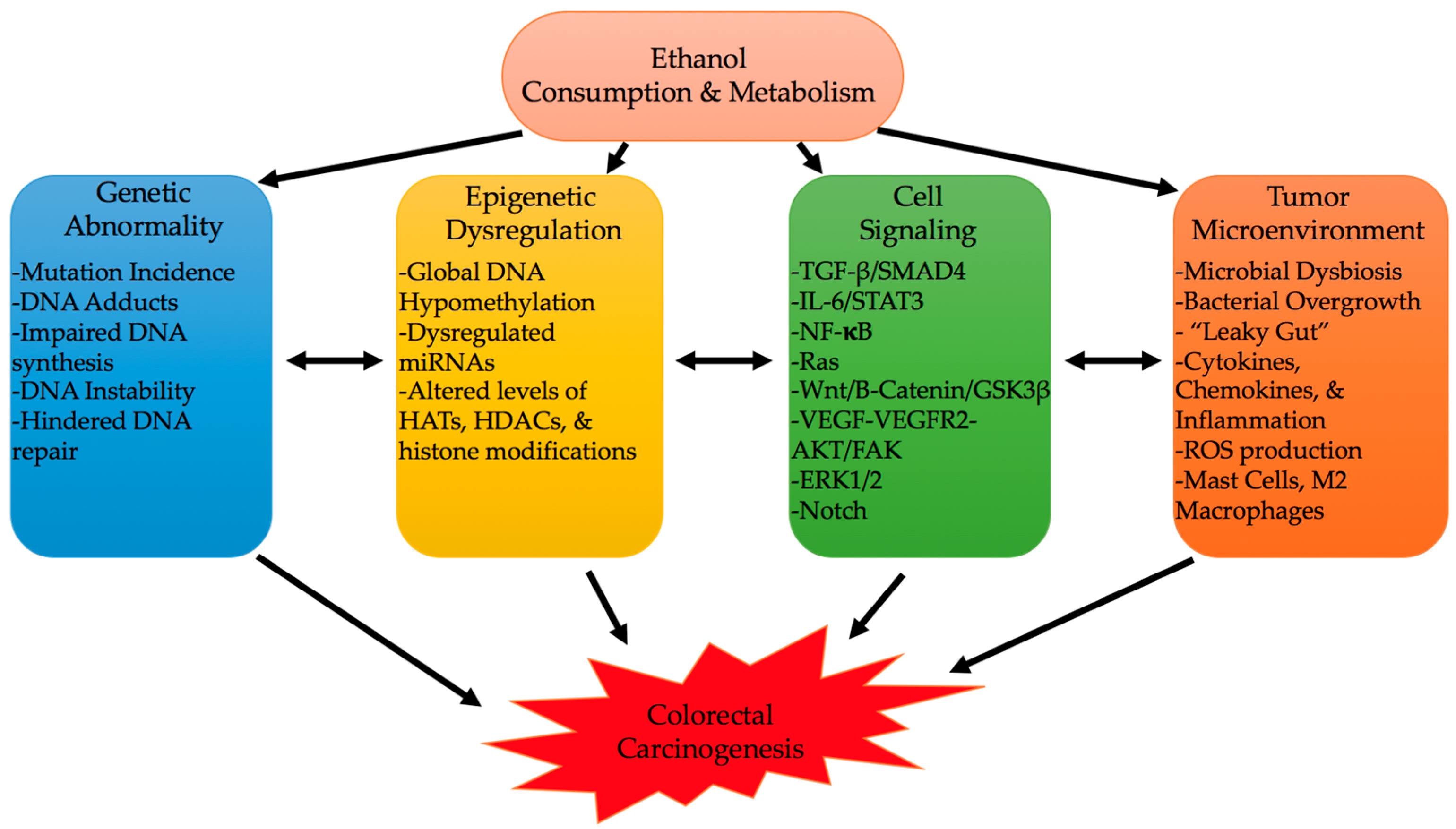 Cancers Free Full Text Colorectal Cancer And Alcohol Consumption Populations To Molecules Html