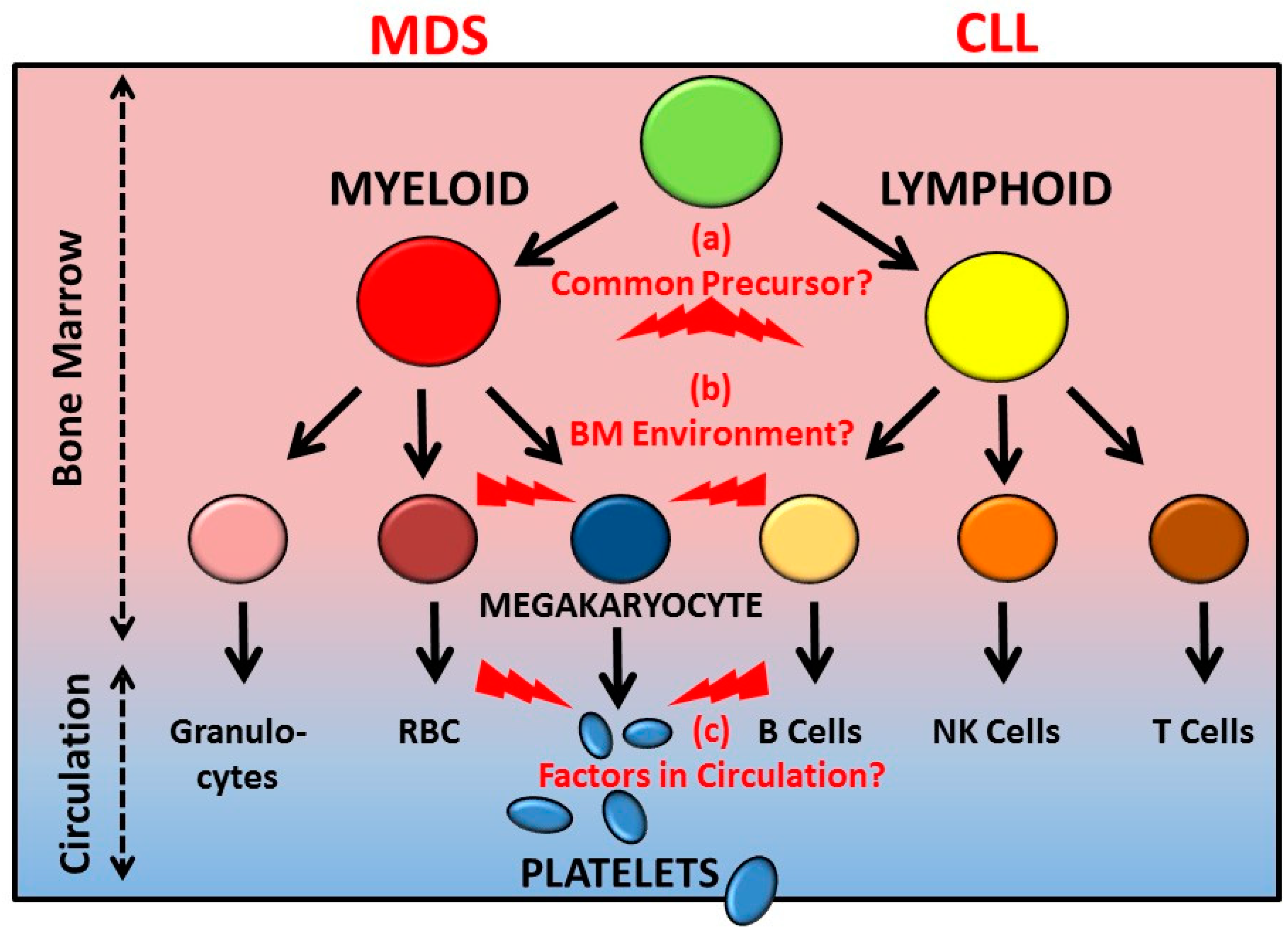 Cancers Free Full Text Bone Marrow Defects And Platelet Function Types Of White Blood Cells Diagram Myelodysplastic Syndromes Treatment 10 00147 G001