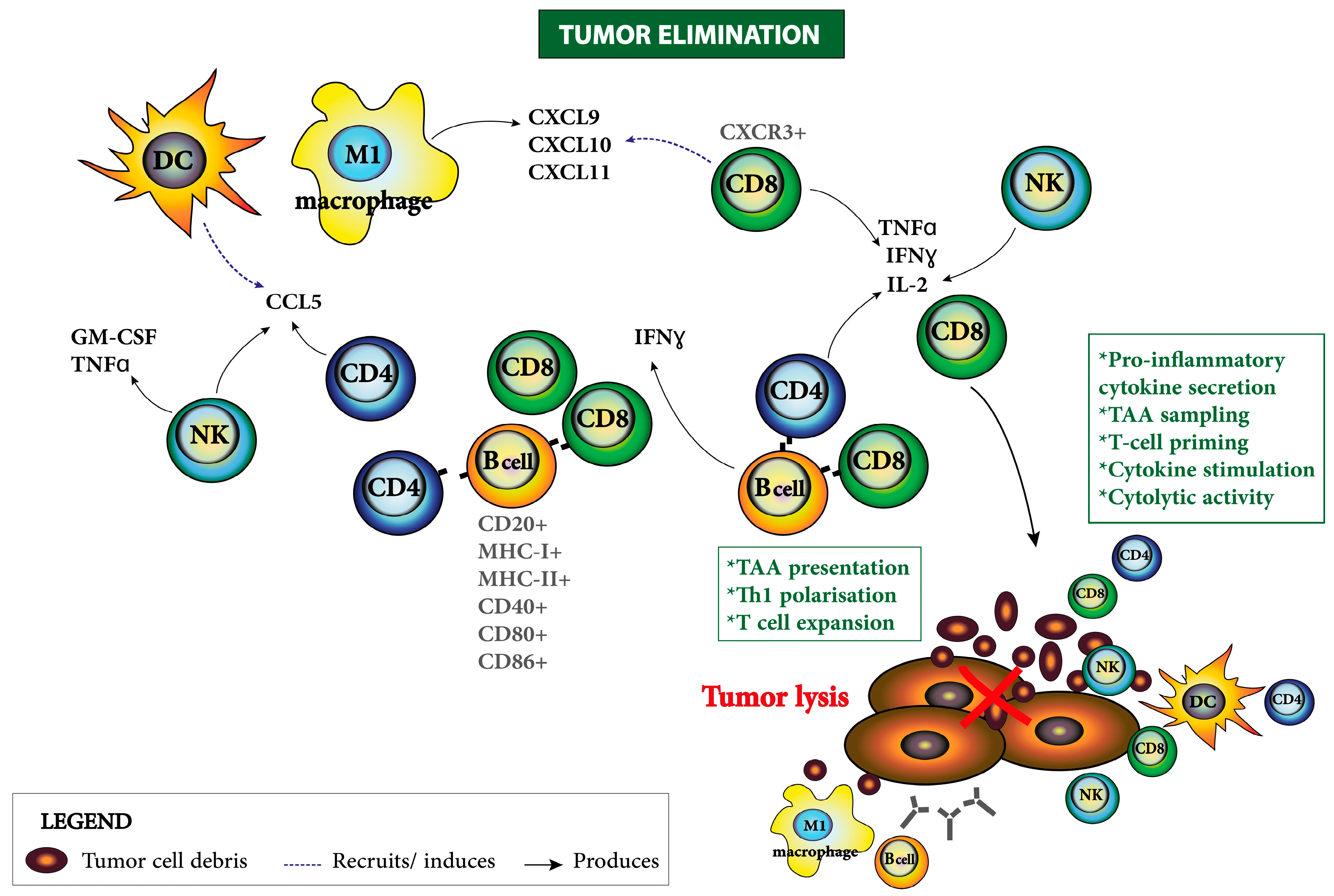 Cancers | Free Full-Text | The Tumor Microenvironment of