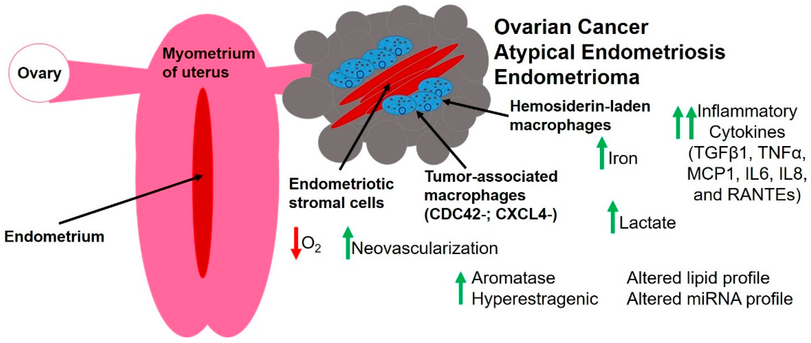 Cancers Free Full Text The Endometriotic Tumor Microenvironment In Ovarian Cancer Html