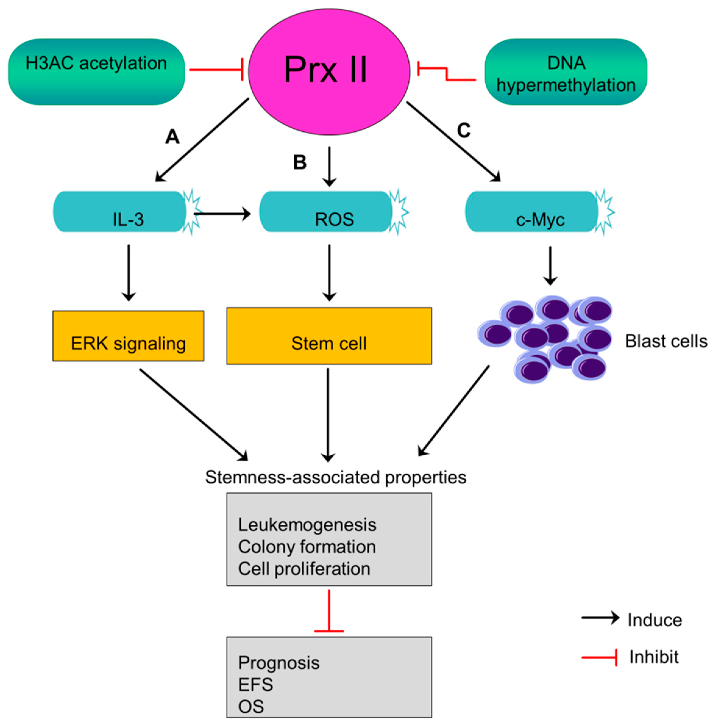 Cancers | Free Full-Text | Peroxiredoxin II Regulates Cancer Stem