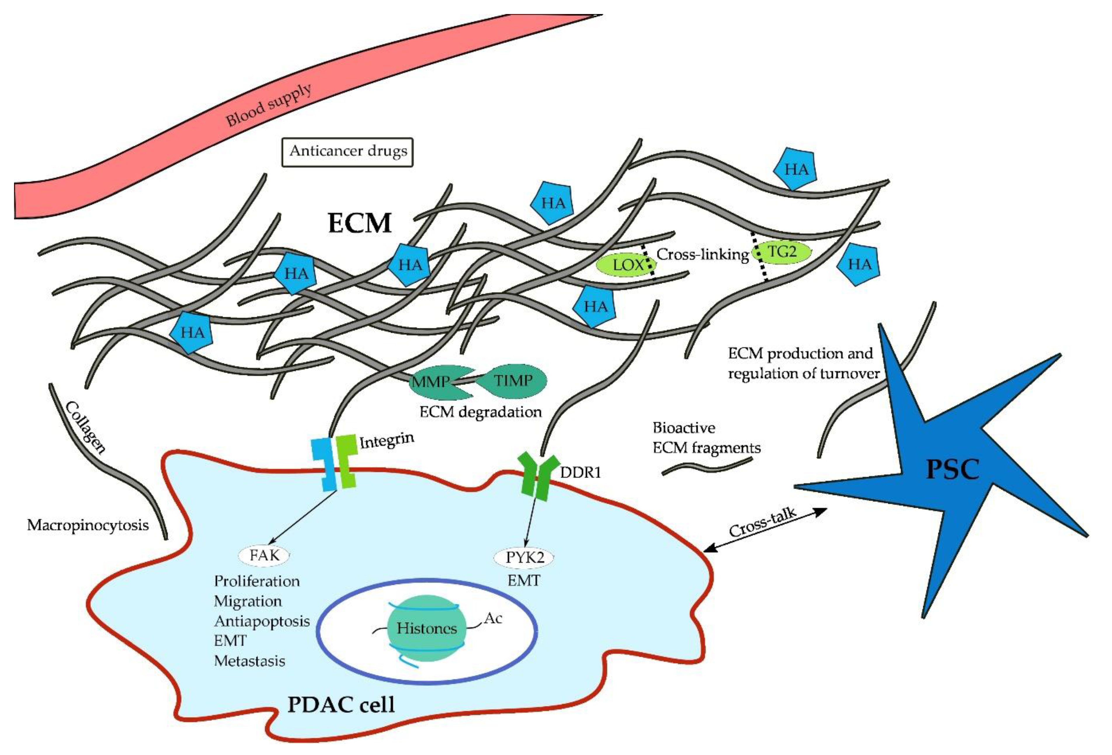 Cancers Free Full Text The Extracellular Matrix And Pancreatic