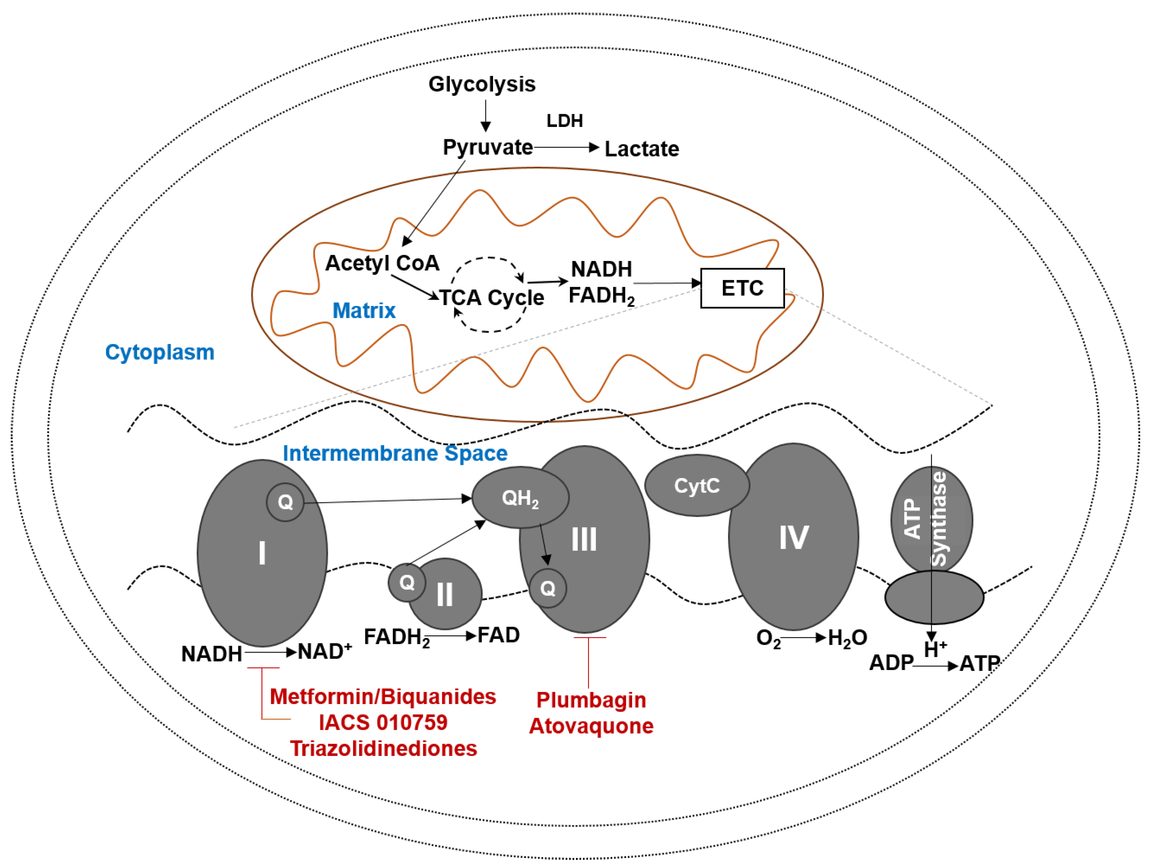 Cancers Free Fulltext Oxidative Phosphorylation A Target For. Cancers 10 00337 G001. Wiring. Pollak Ignition Switch Wiring Diagram For Wisconson At Scoala.co