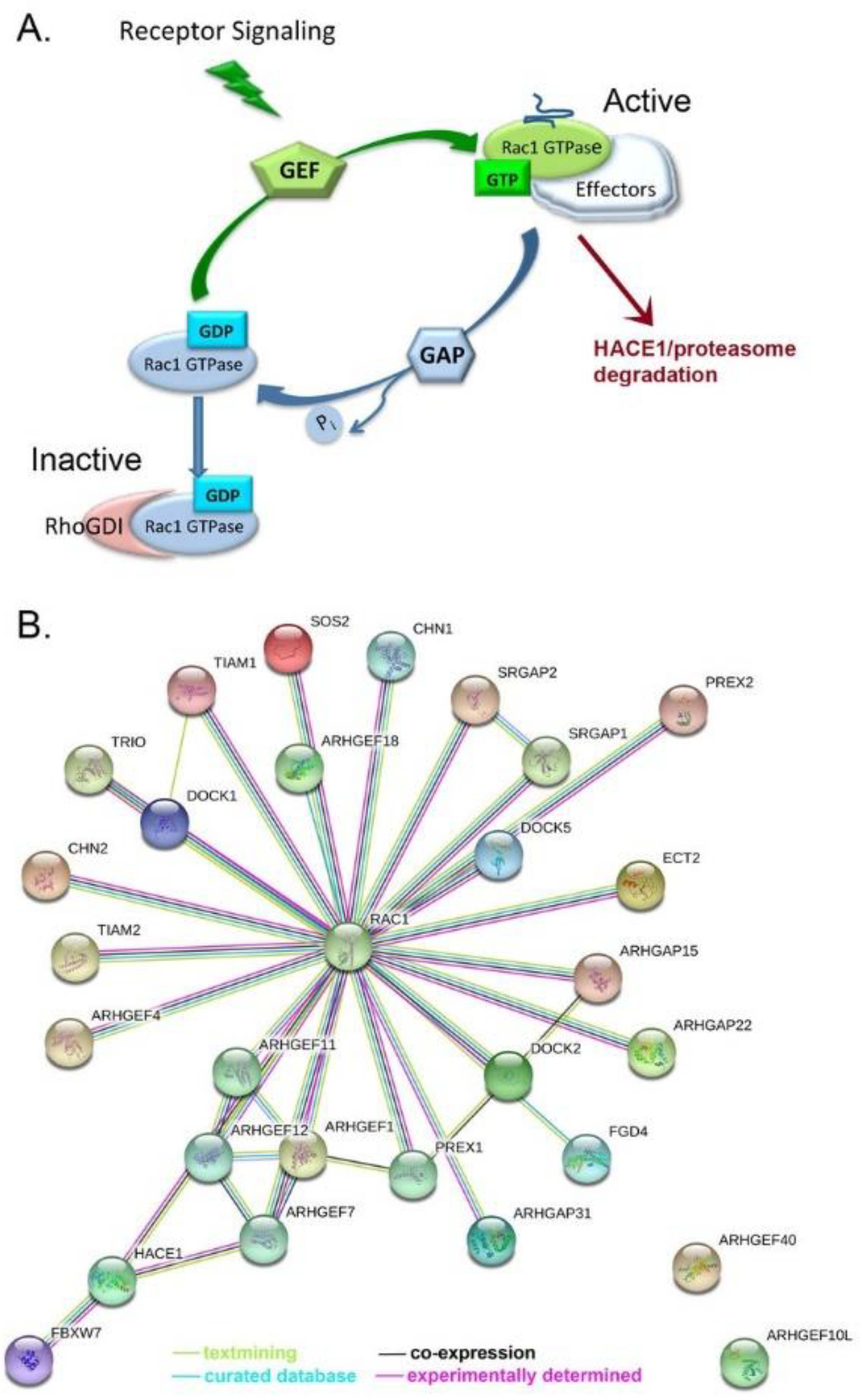 Cancers | Free Full-Text | Ovarian Tumor Microenvironment