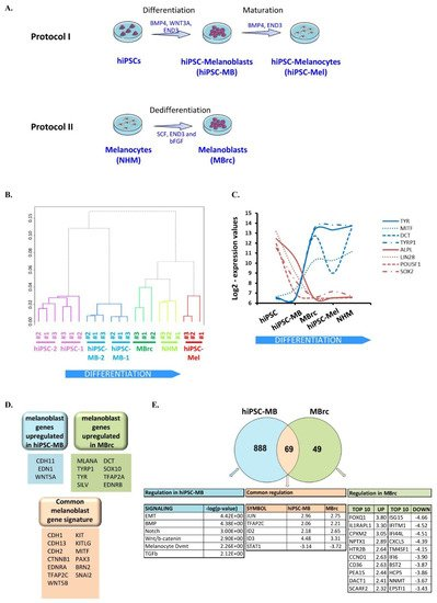 Cancers | Topical Collection : Drug Resistance and Novel Therapies
