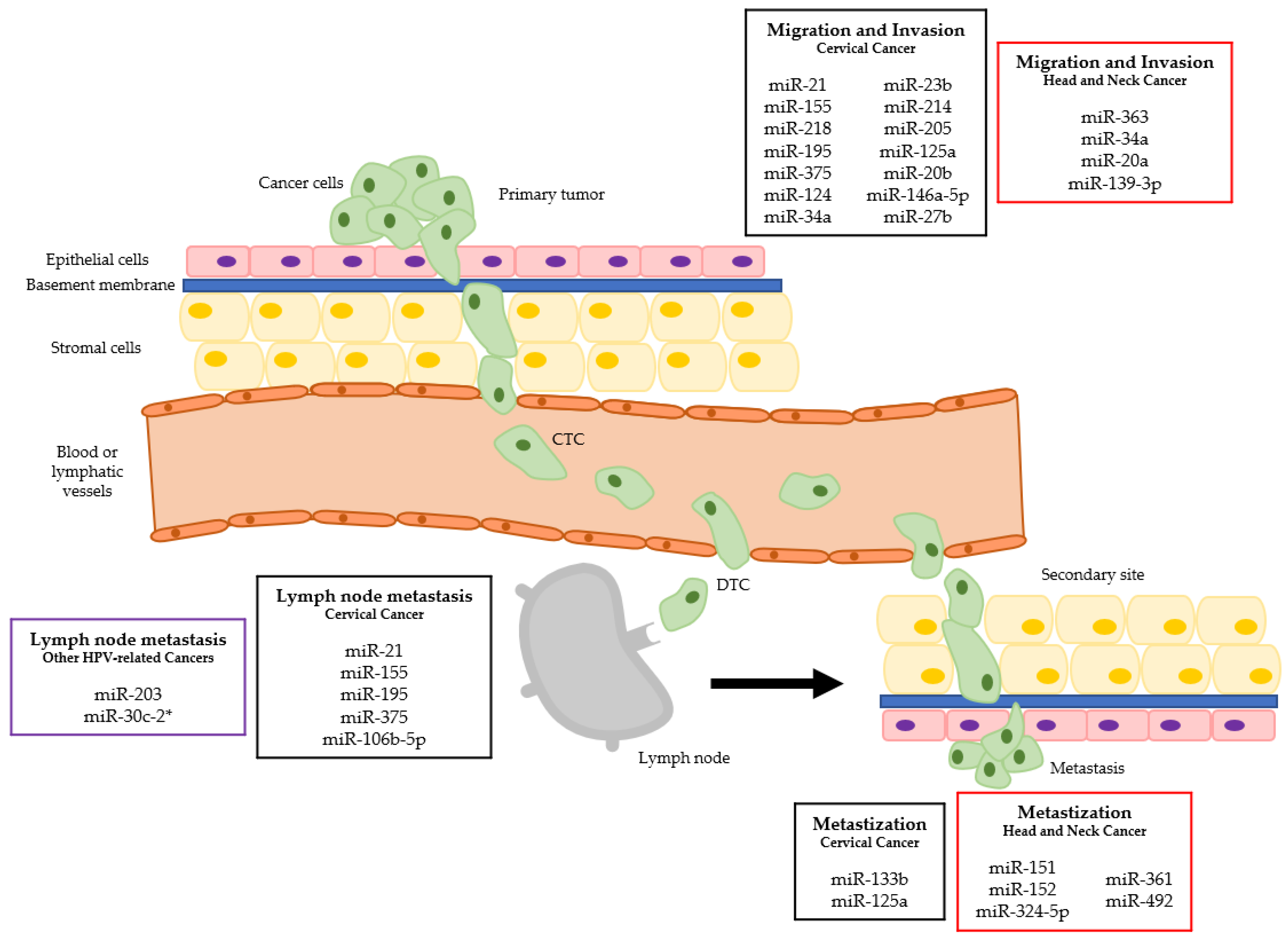 Cancers | Free Full-Text | The Role of MicroRNAs in the Metastatic