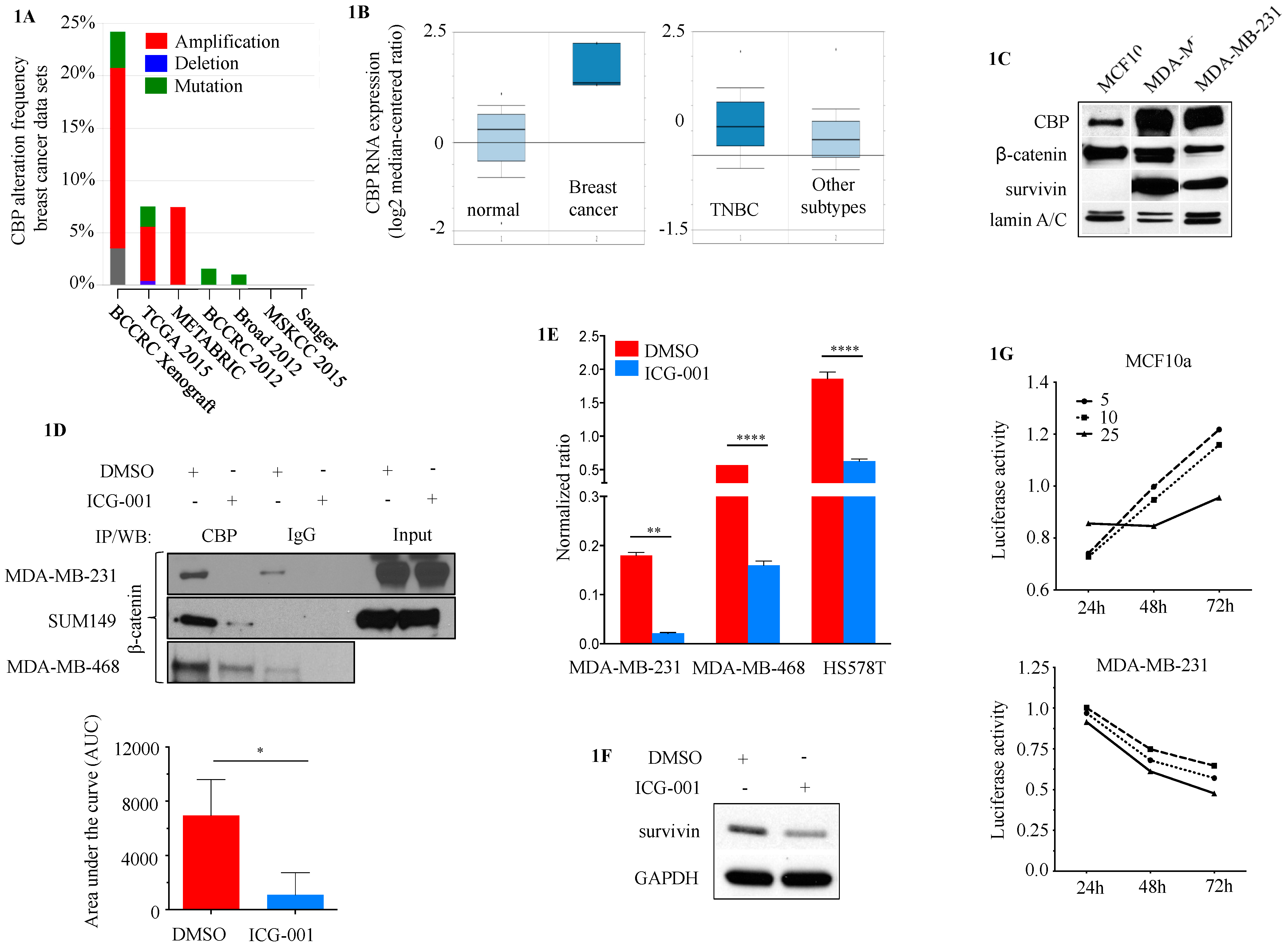 Cancers | Free Full-Text | CBP/β-Catenin/FOXM1 Is a Novel