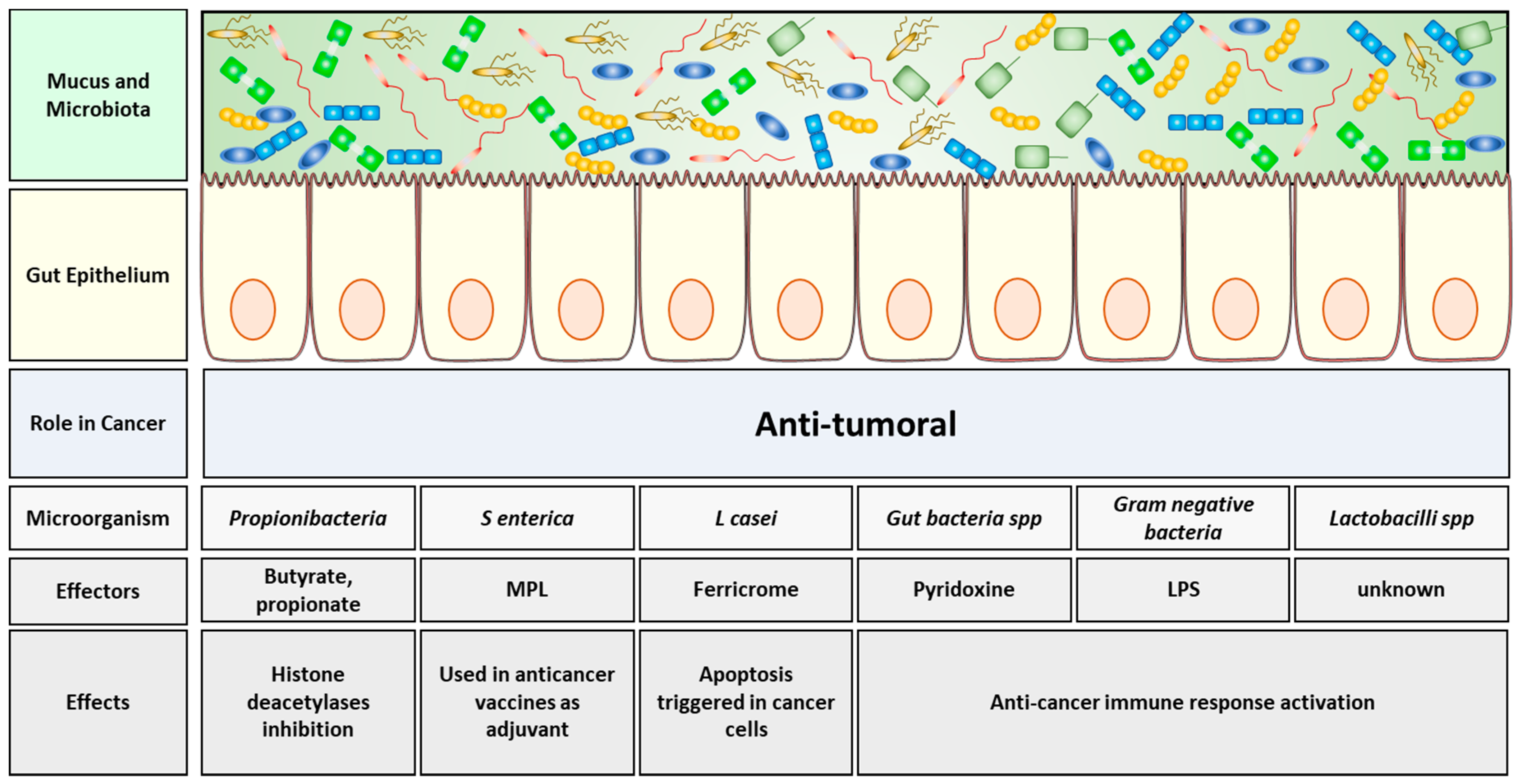 Cancers | Free Full-Text | Gut Microbiota and Cancer: From