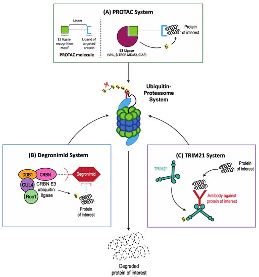 Cancers | Free Full-Text | Targeting Proteotoxic Stress in