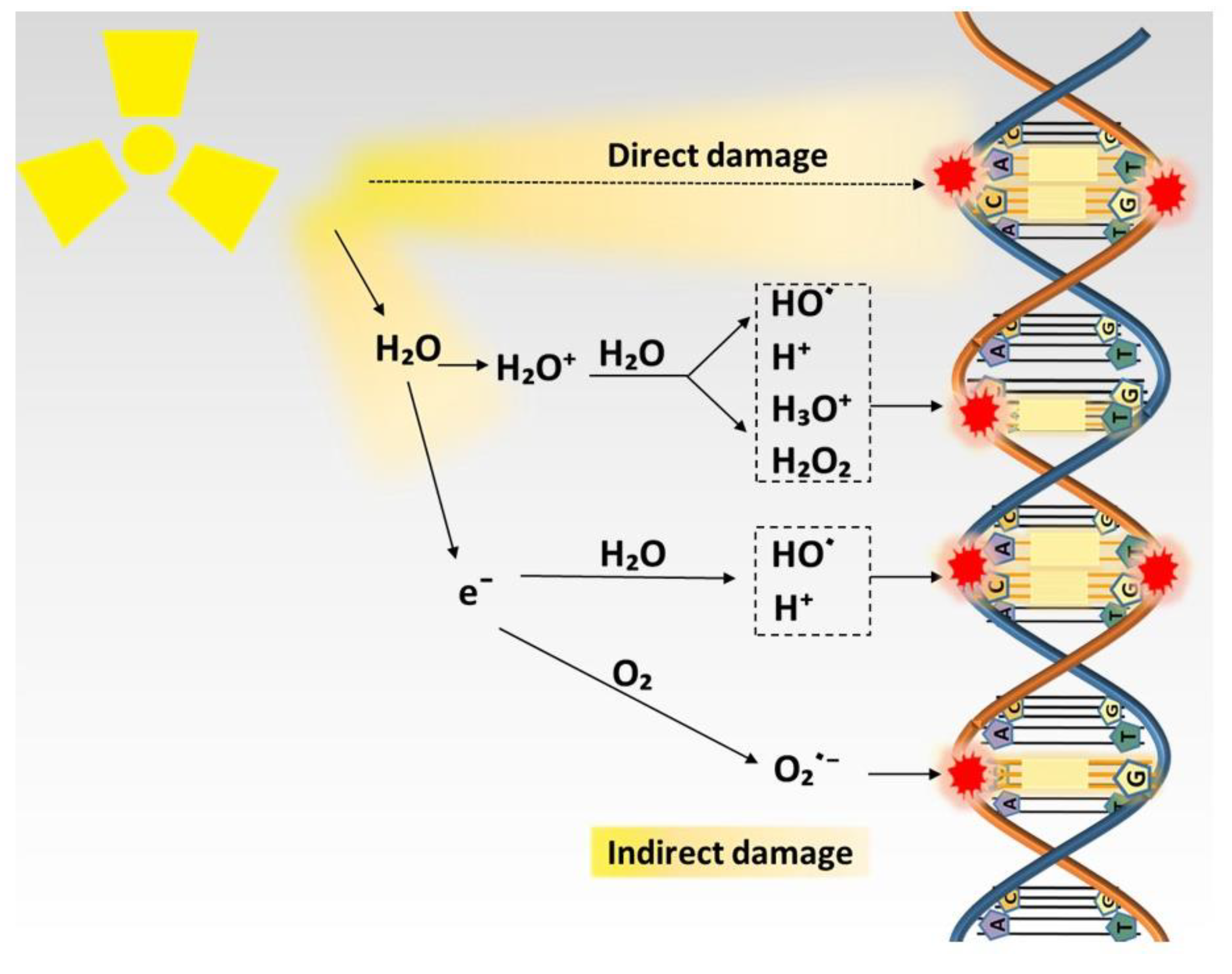 Cancers Free Full Text Hypoxic Radioresistance Can Ros Be The Key To Overcome It Html