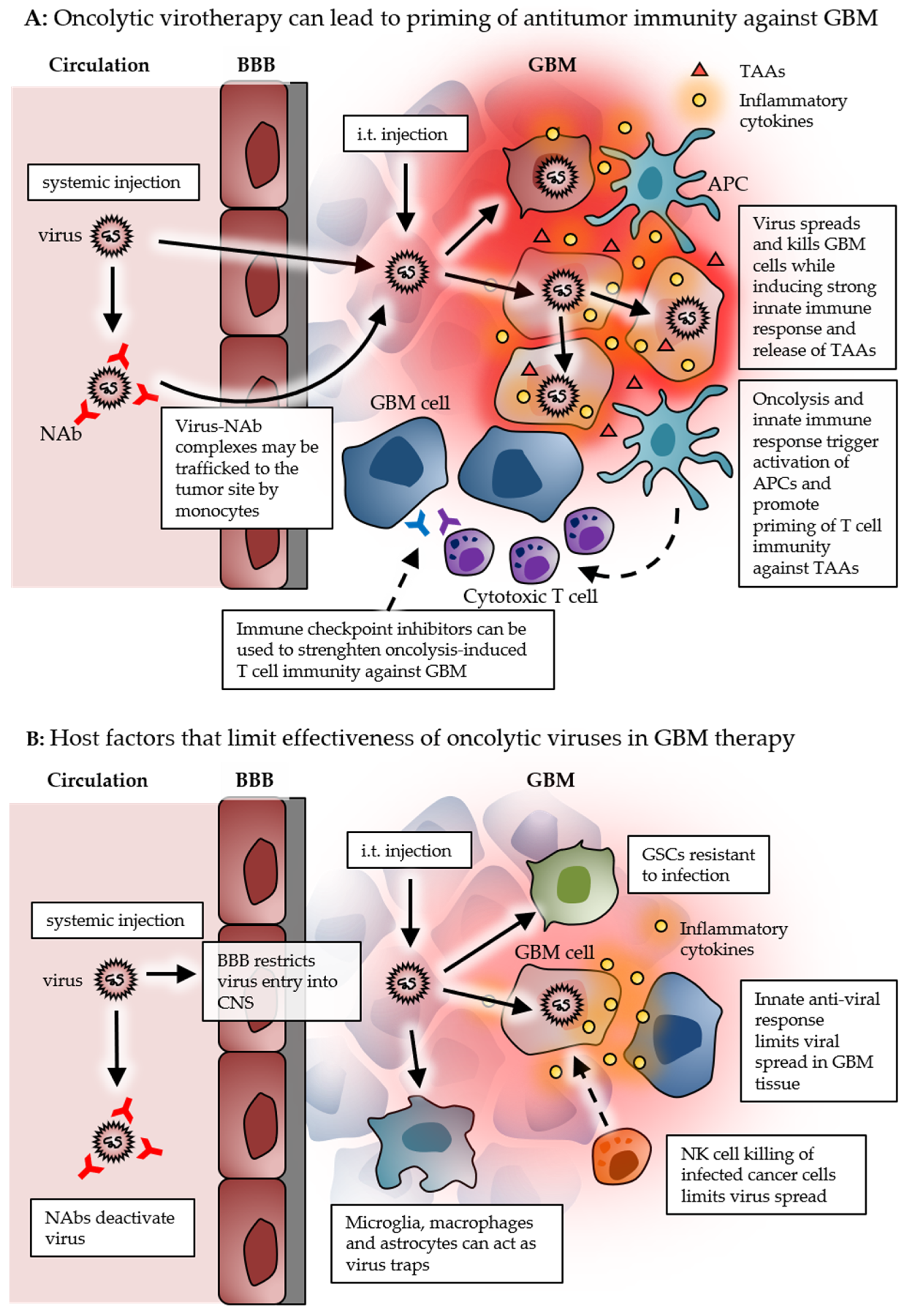 Cancers | Free Full-Text | Virus-Based Immunotherapy of