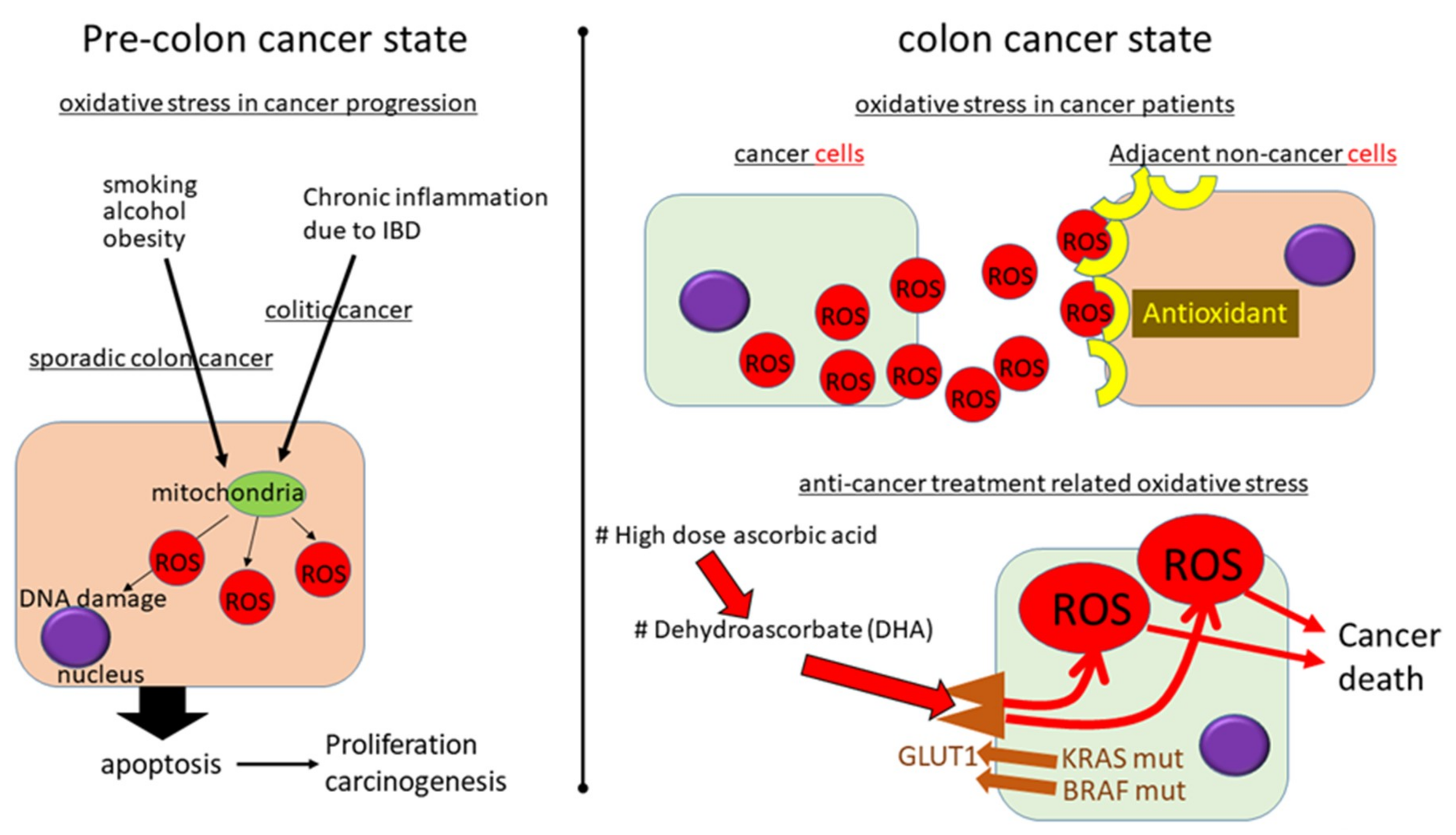 Cancers Free Full Text Paradoxical Roles Of Oxidative Stress Response In The Digestive System Before And After Carcinogenesis Html