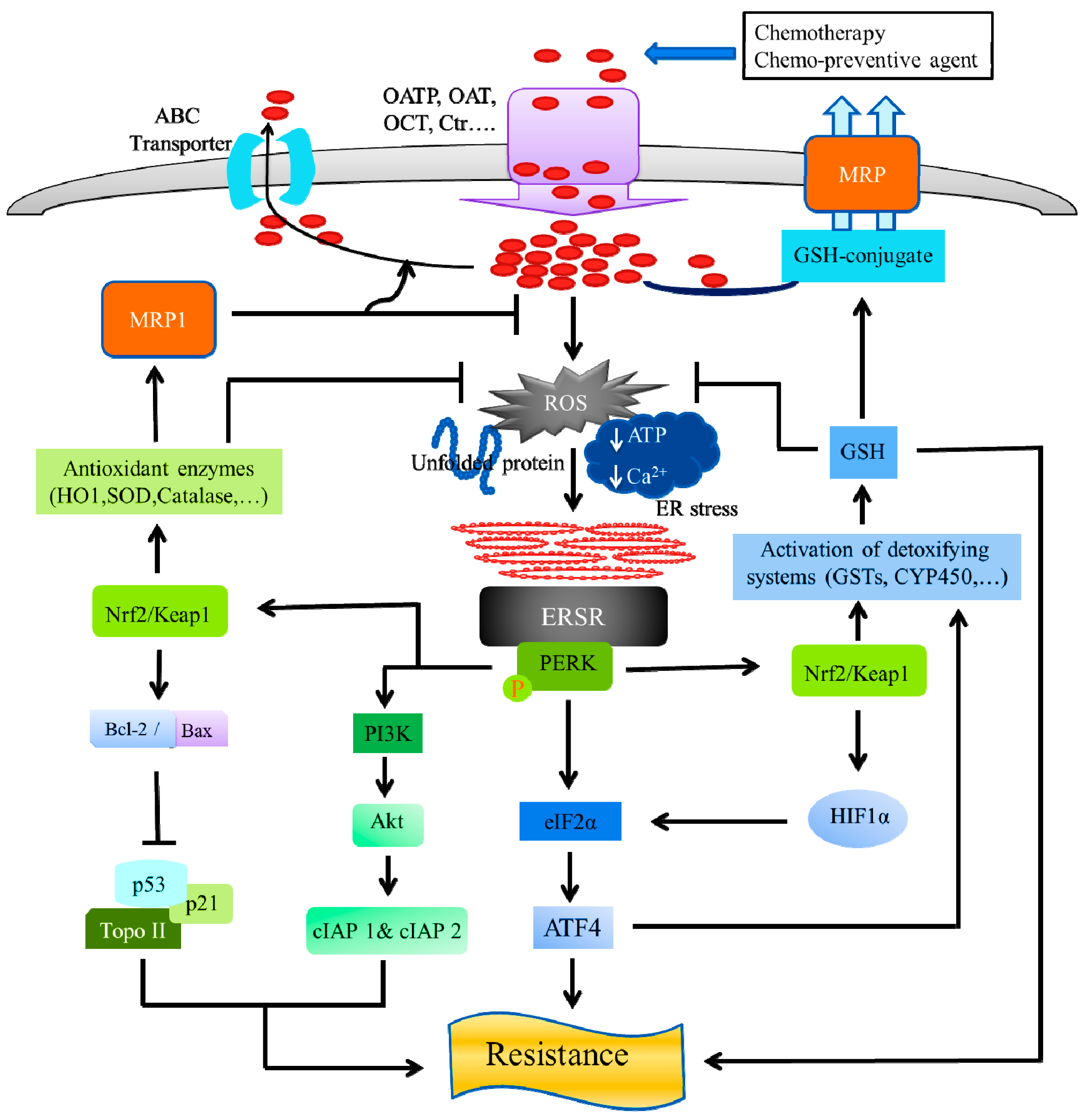 Cancers Free Full Text Chemotherapy Resistance Explained Through Endoplasmic Reticulum Stress Dependent Signaling Html
