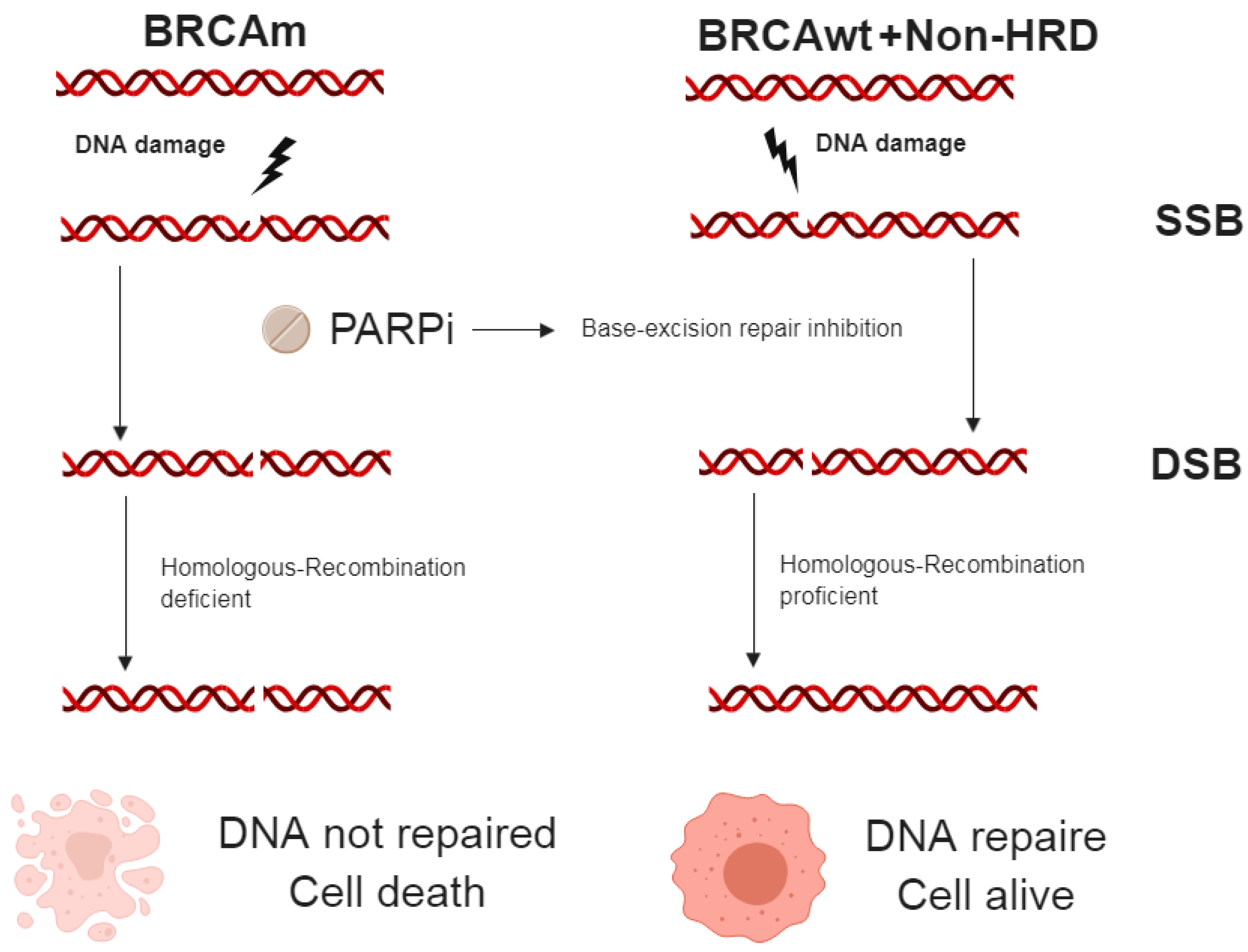 Cancers Free Full Text Tailoring Ovarian Cancer Treatment Implications Of Brca1 2 Mutations