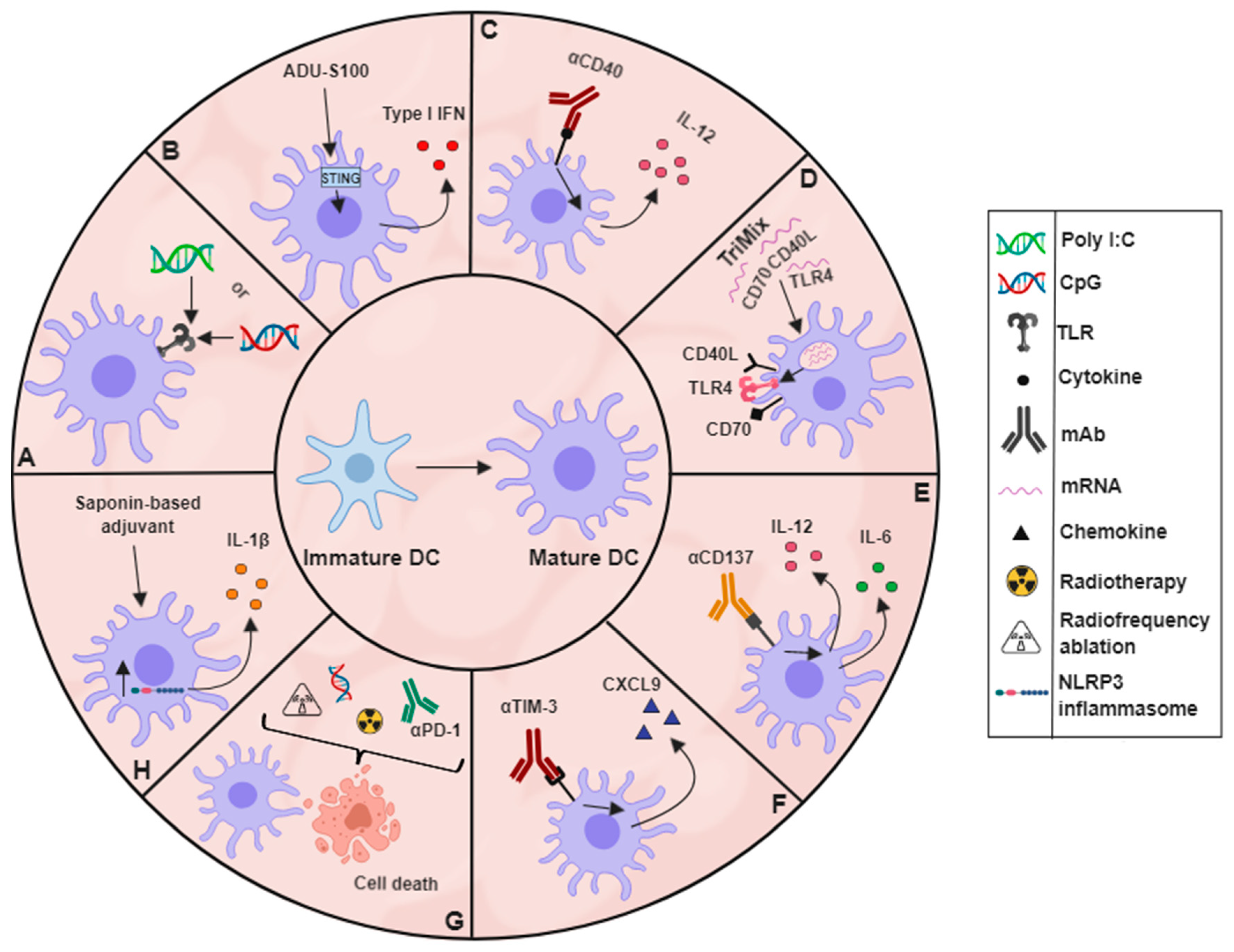 Cancers | Free Full-Text | Unleashing Tumour-Dendritic Cells to