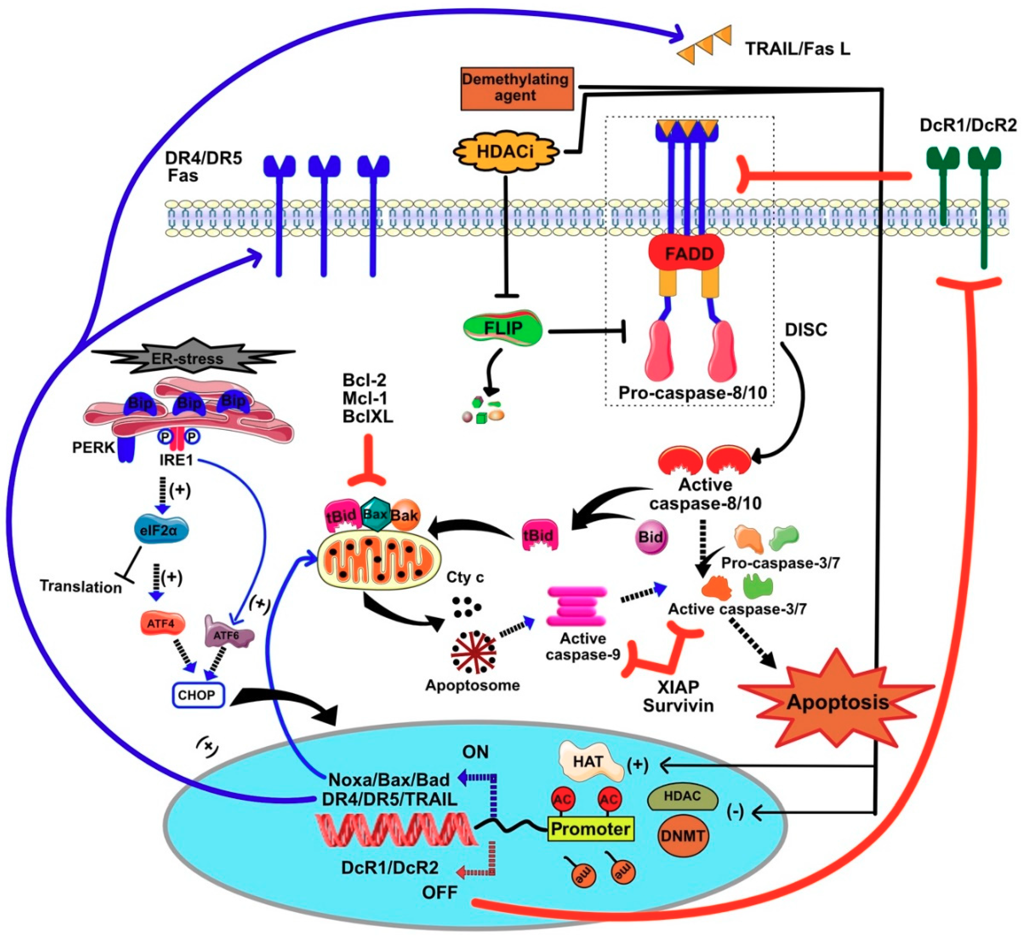 cancers free full text epigenetic regulation of trail signaling