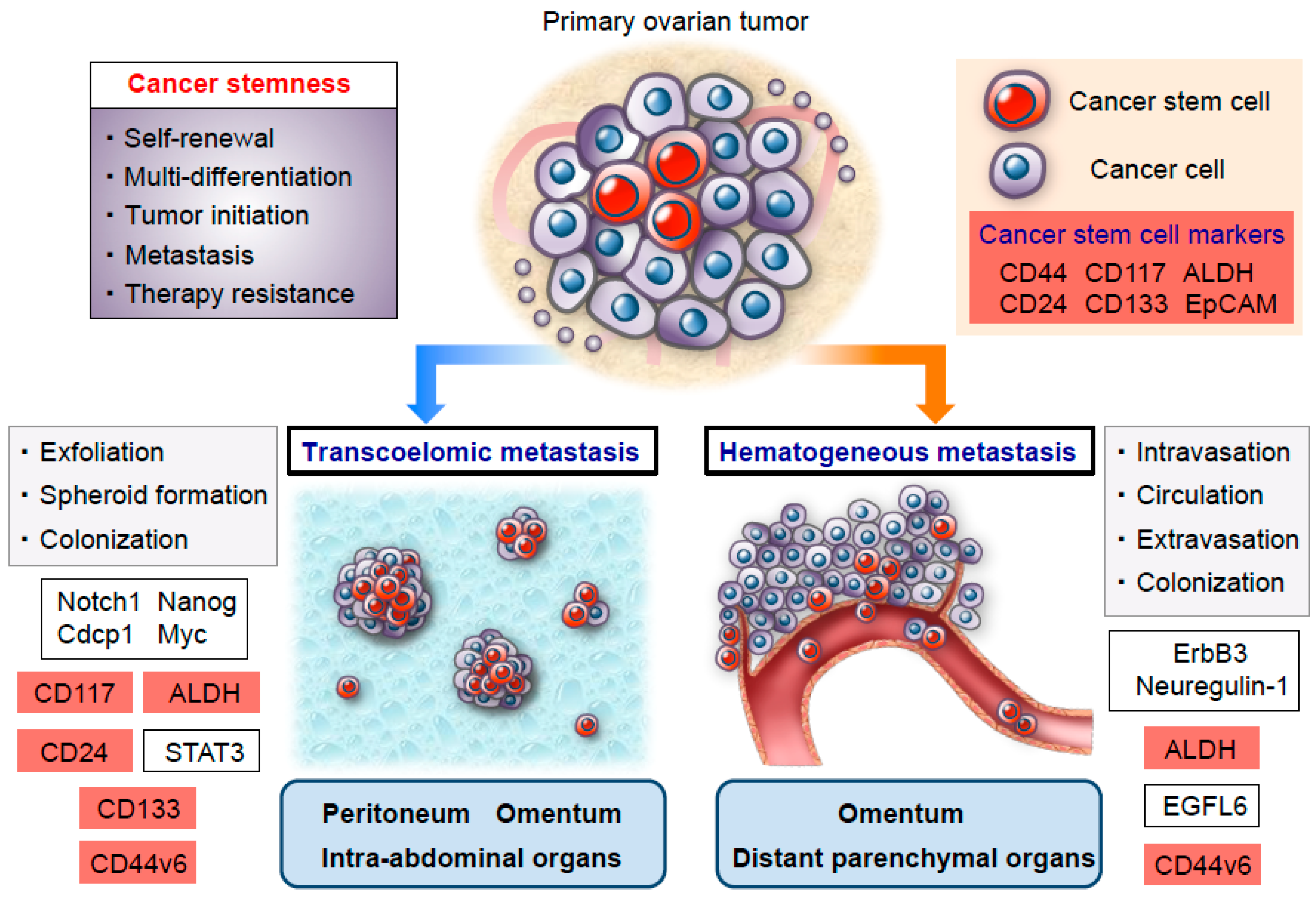 Cancers Free Full Text Ovarian Cancer Stemness Biological And Clinical Implications For Metastasis And Chemotherapy Resistance Html