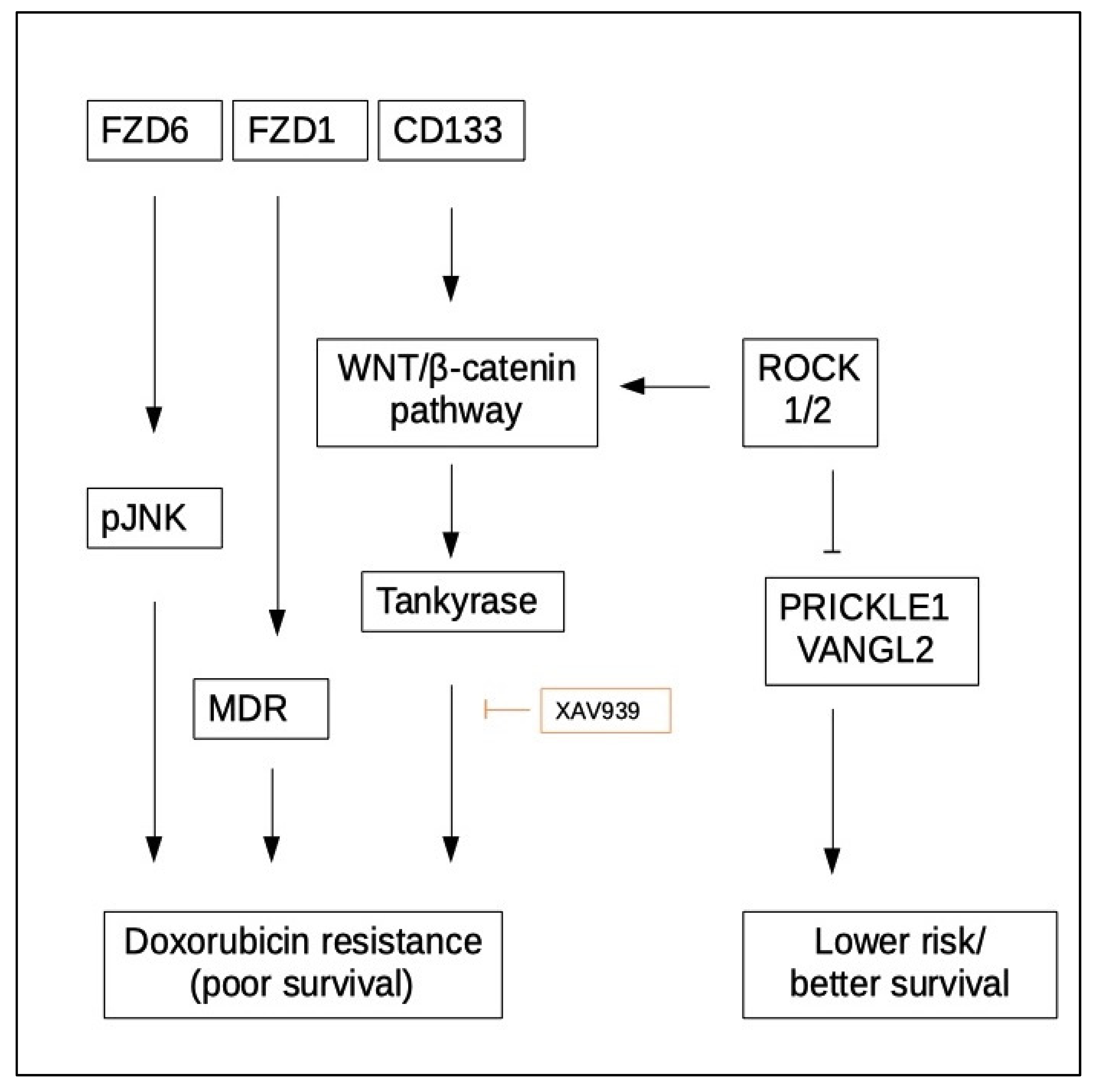 Cancers   Free Full-Text   WNT Signaling in Neuroblastoma   HTML