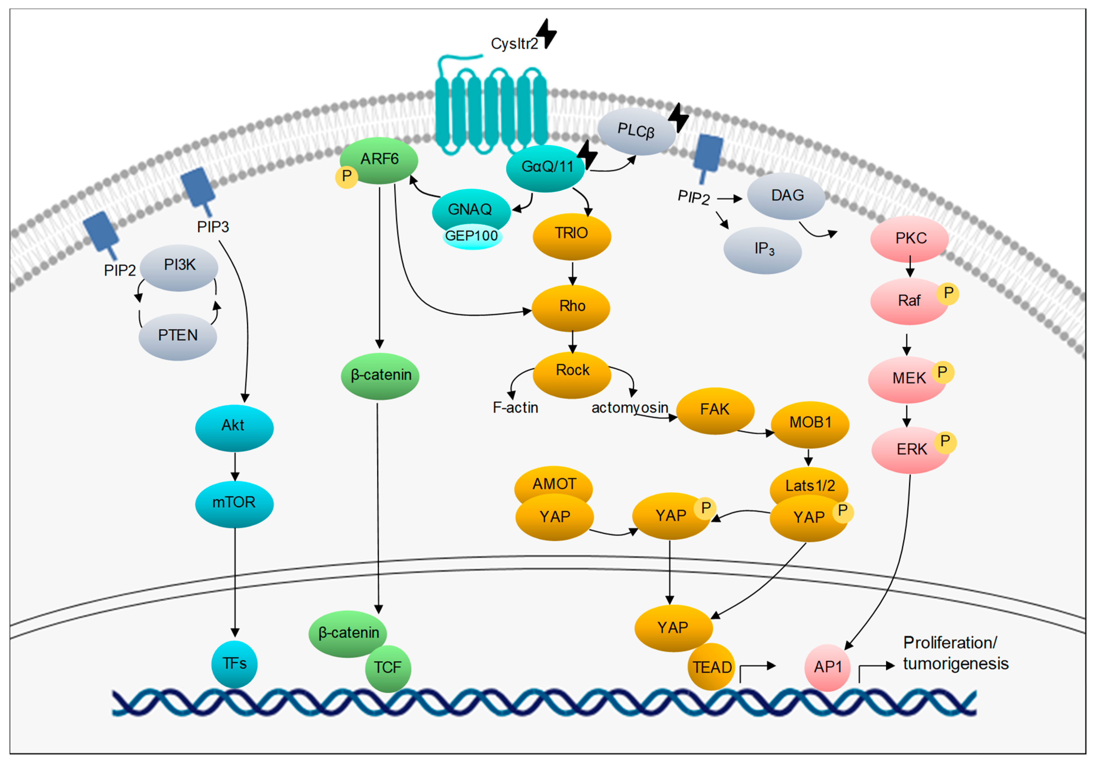 71fed893584 Cancers | Free Full-Text | Emerging Therapeutic Opportunities Based ...