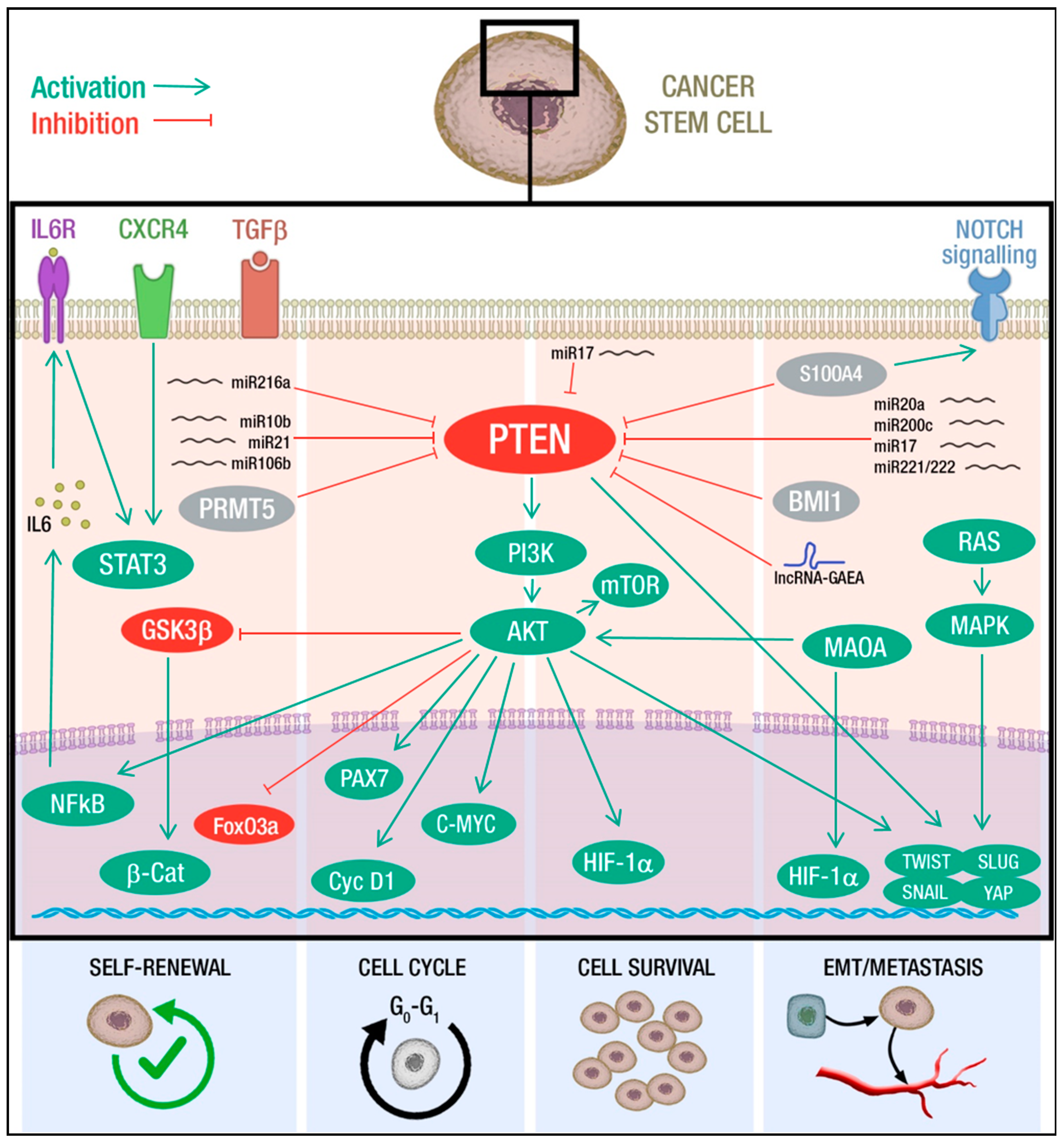 Cancers | Free Full-Text | PTEN Tumor-Suppressor: The Dam of
