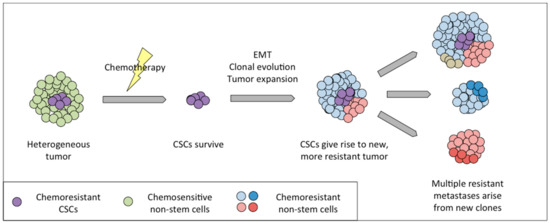 Cancers Free Full Text The Role Of Intra Tumoral Heterogeneity And Its Clinical Relevance In Epithelial Ovarian Cancer Recurrence And Metastasis Html