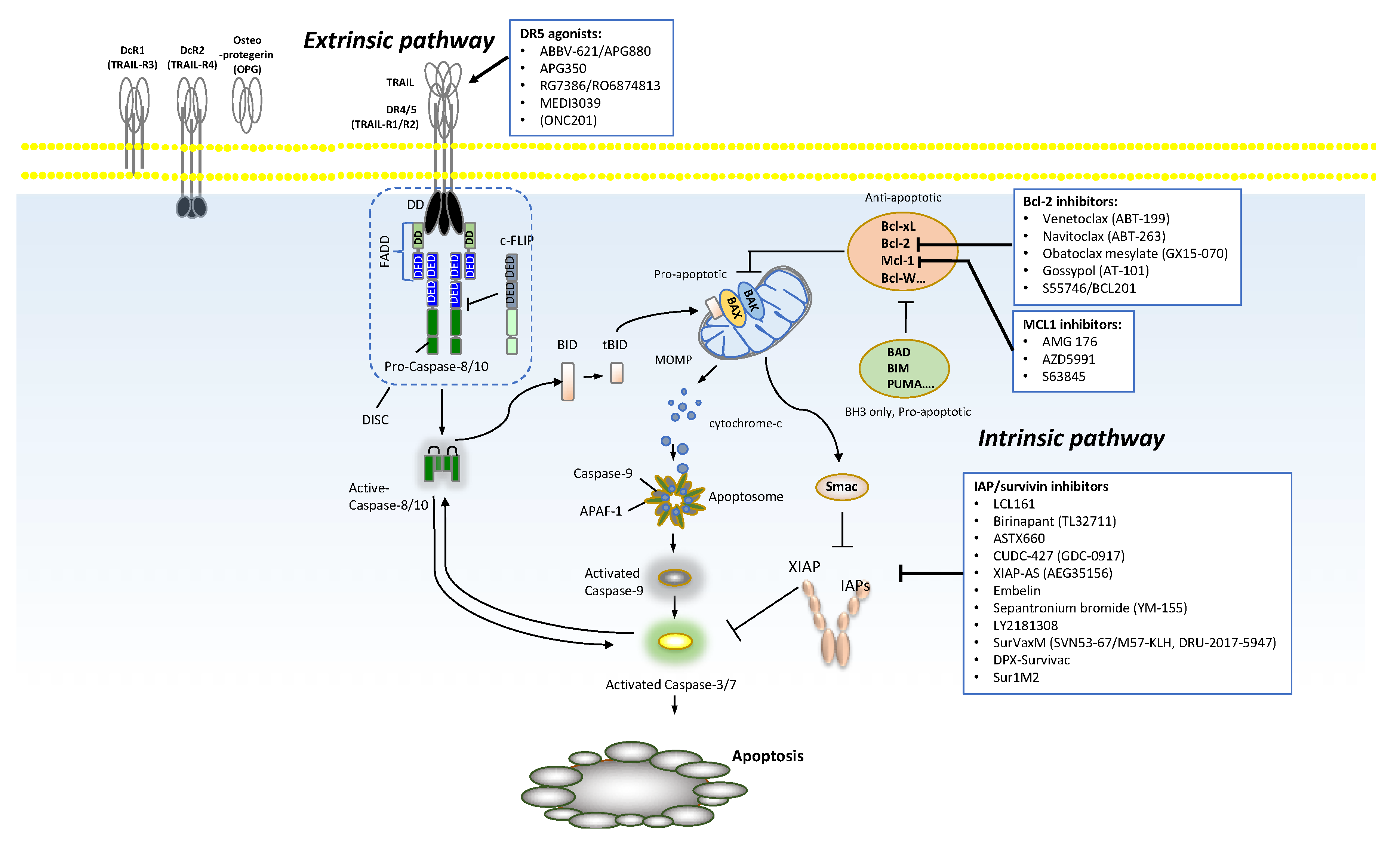 Cancers | Free Full-Text | Novel Apoptosis-Inducing Agents