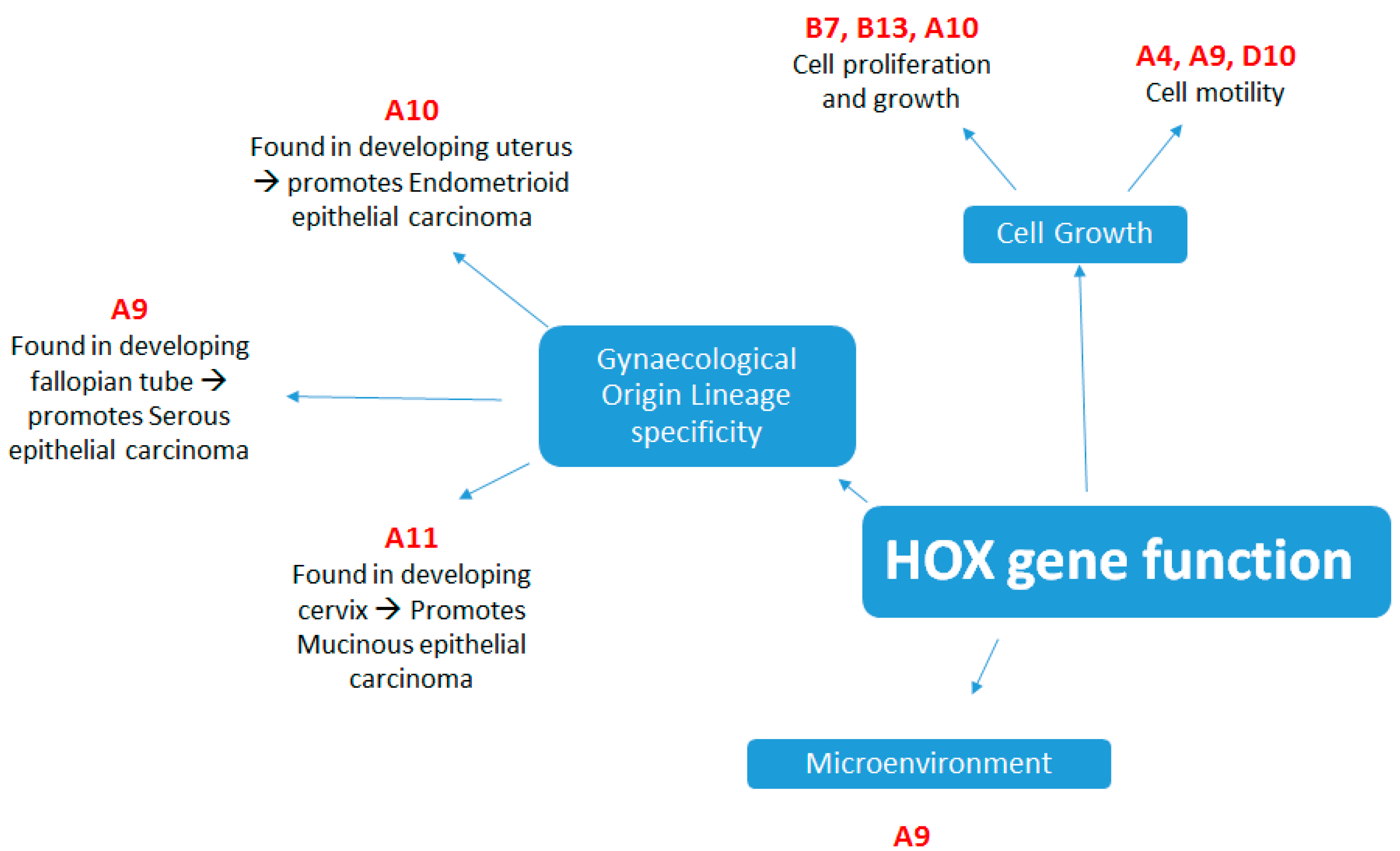 Cancers Free Full Text Hox Genes In High Grade Ovarian Cancer
