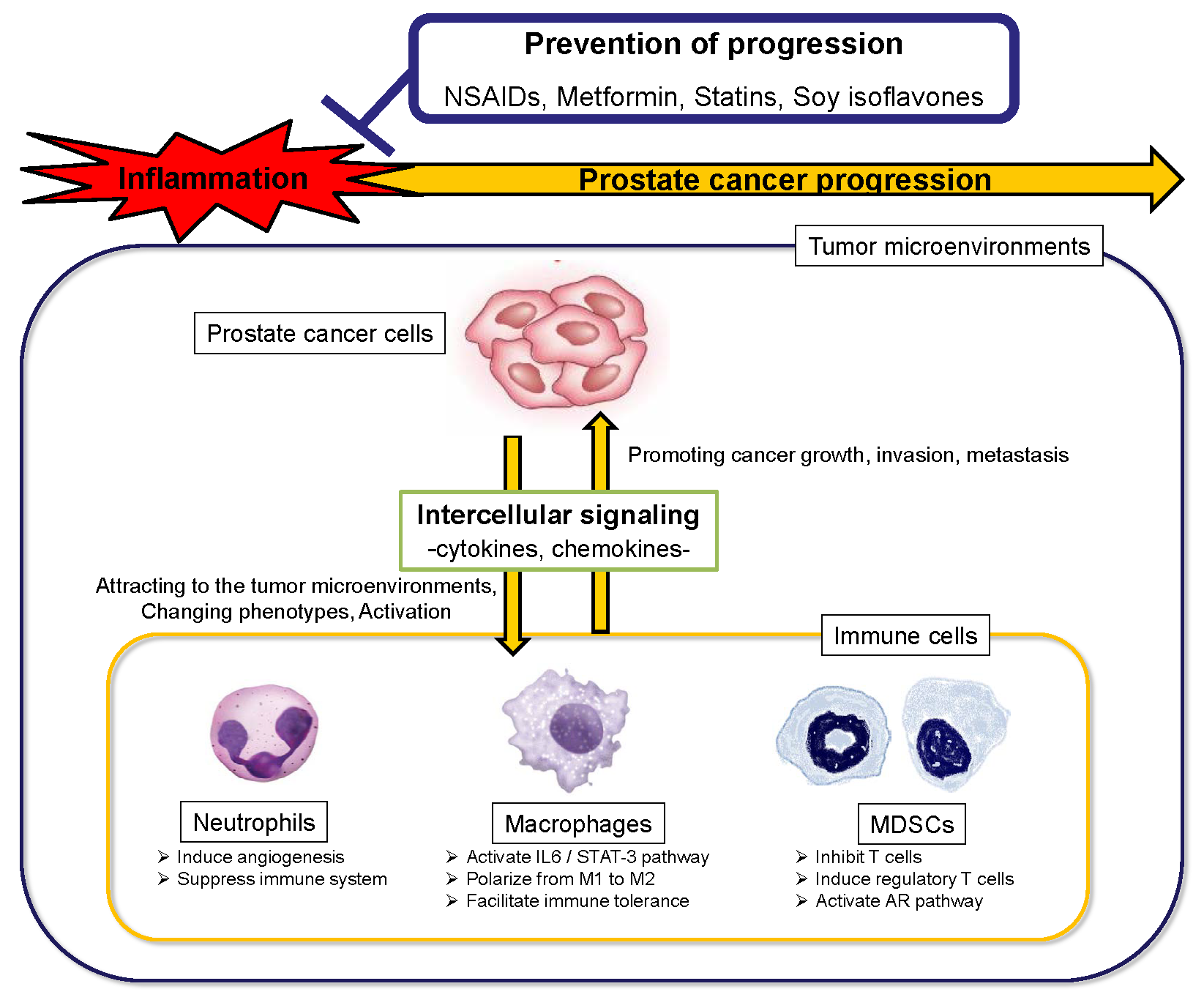 Cancers | Free Full-Text | Main Inflammatory Cells and Potentials of
