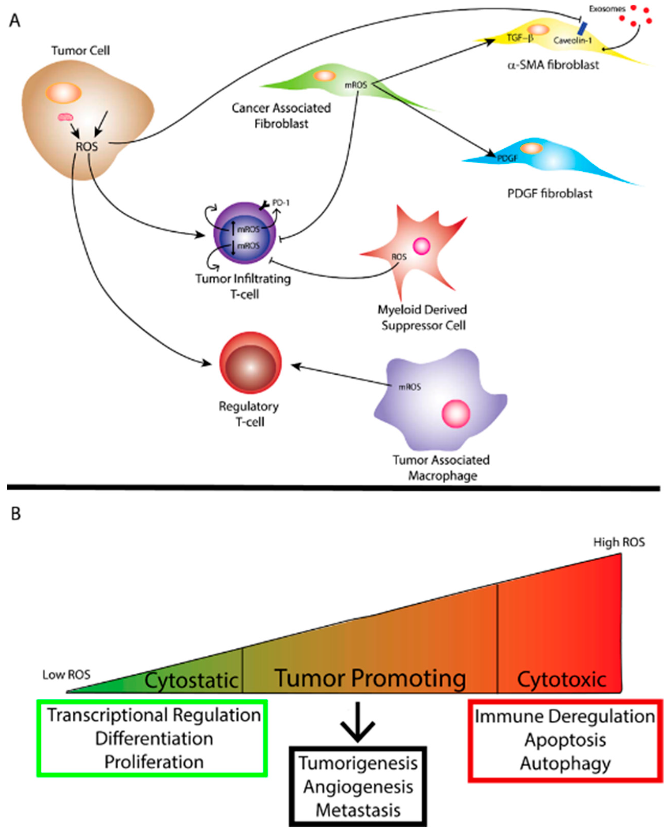 Cancers | Free Full-Text | Reactive Oxygen Species in the