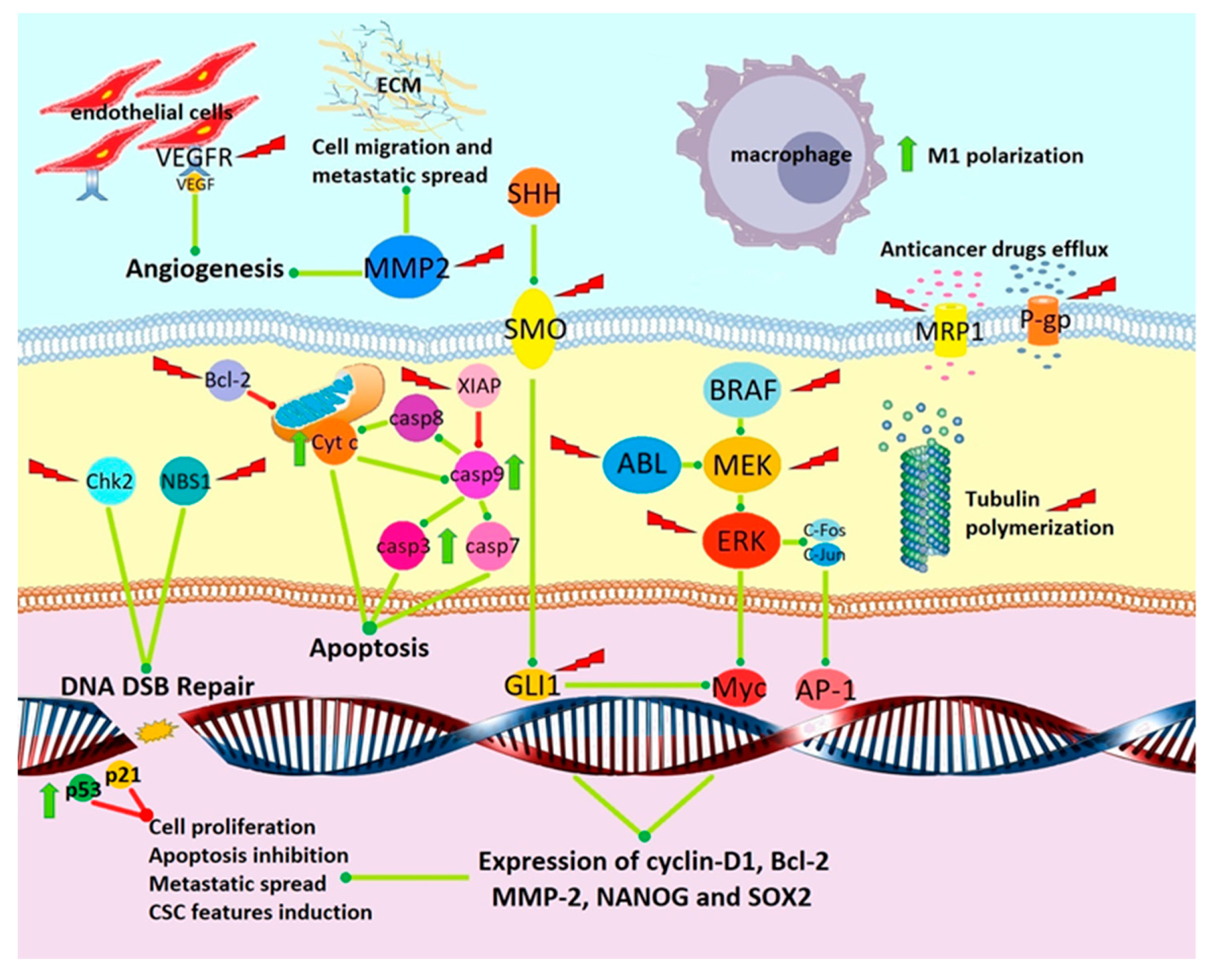 Cancers | Free Full-Text | Mebendazole as a Candidate for