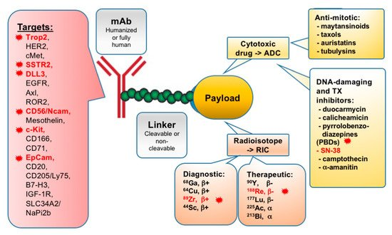 Cancers Free Full Text Tumor Targeted Drug Conjugates As An Emerging Novel Therapeutic