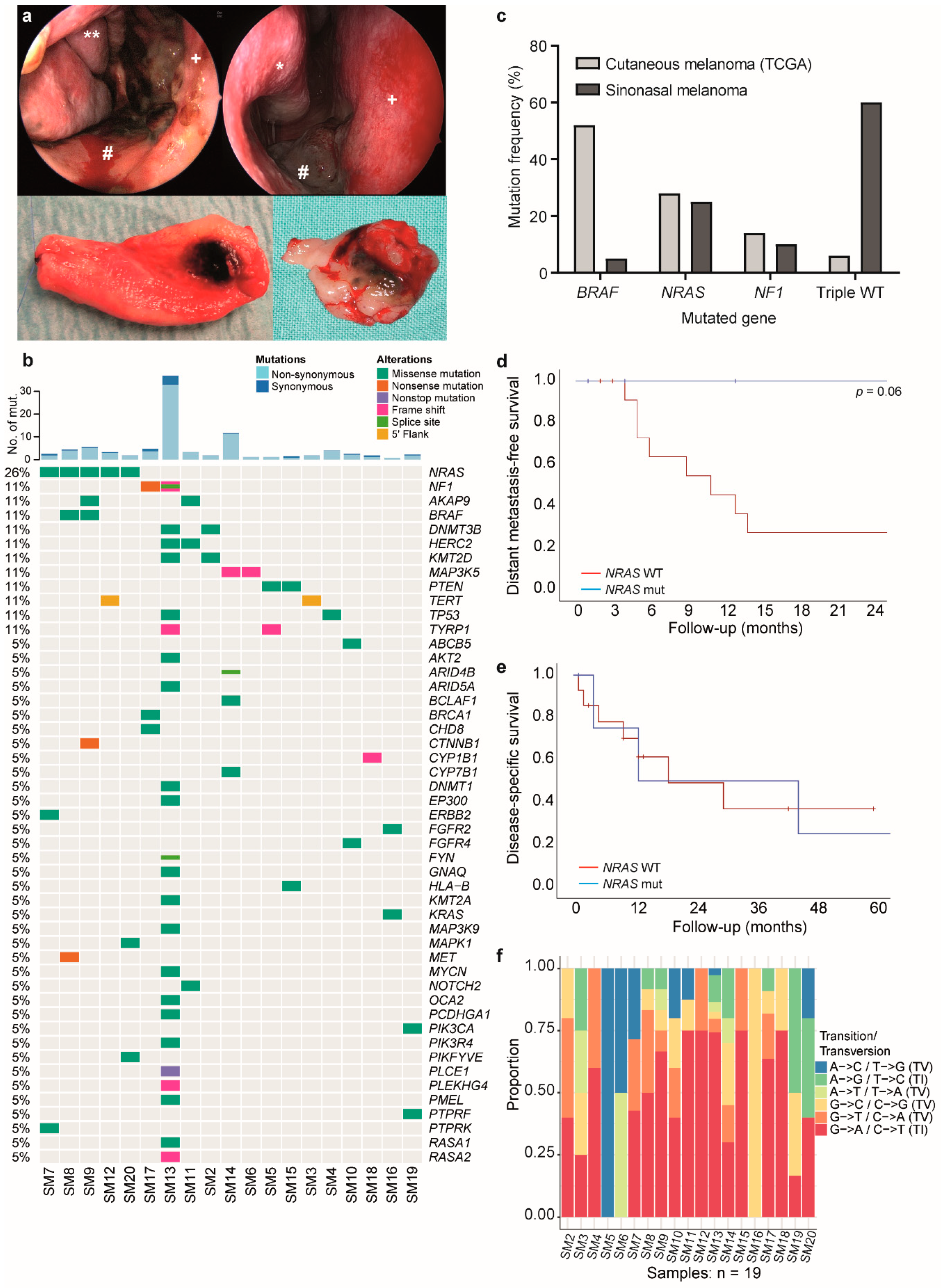 Cancers   Free Full-Text   Morpho-Molecular Assessment