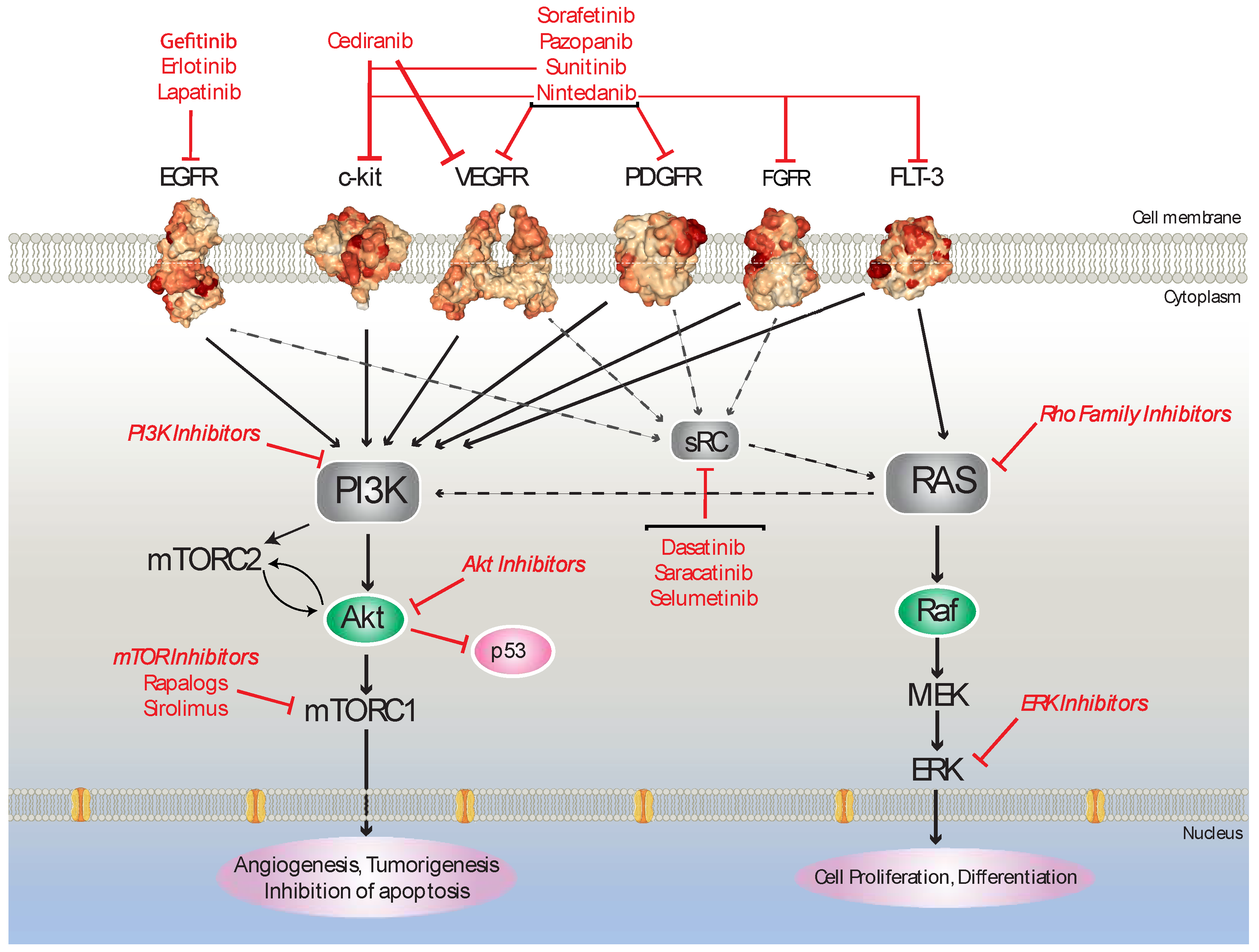 Cancers Free Full Text Kinase Inhibitors And Ovarian Cancer Html