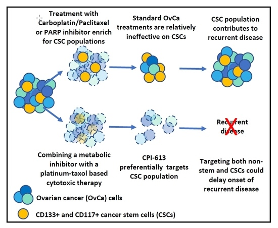 Cancers Free Full Text The Metabolic Inhibitor Cpi 613 Negates Treatment Enrichment Of Ovarian Cancer Stem Cells
