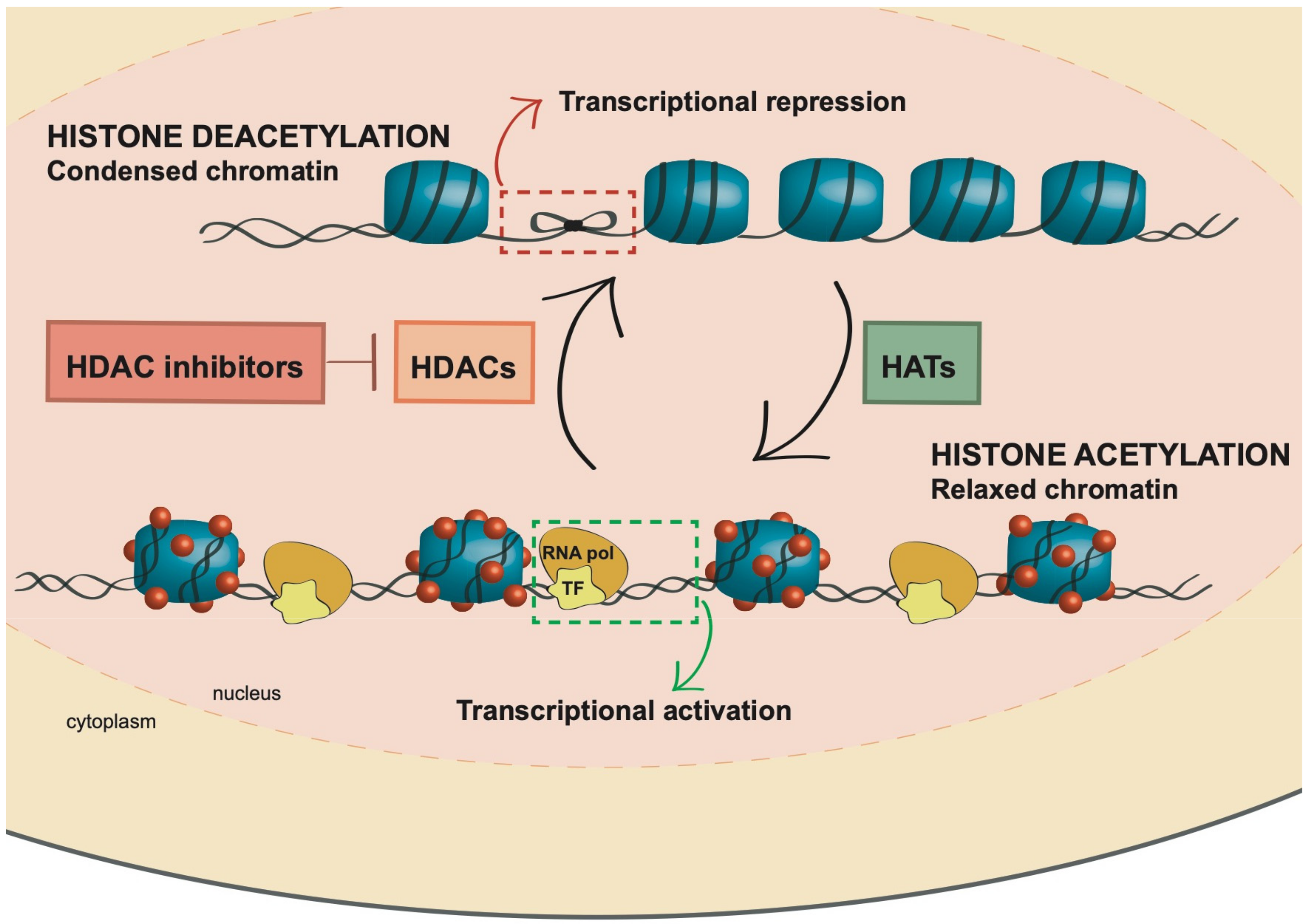 Cancers | Free Full-Text | HDAC Inhibitors in Acute Myeloid ...