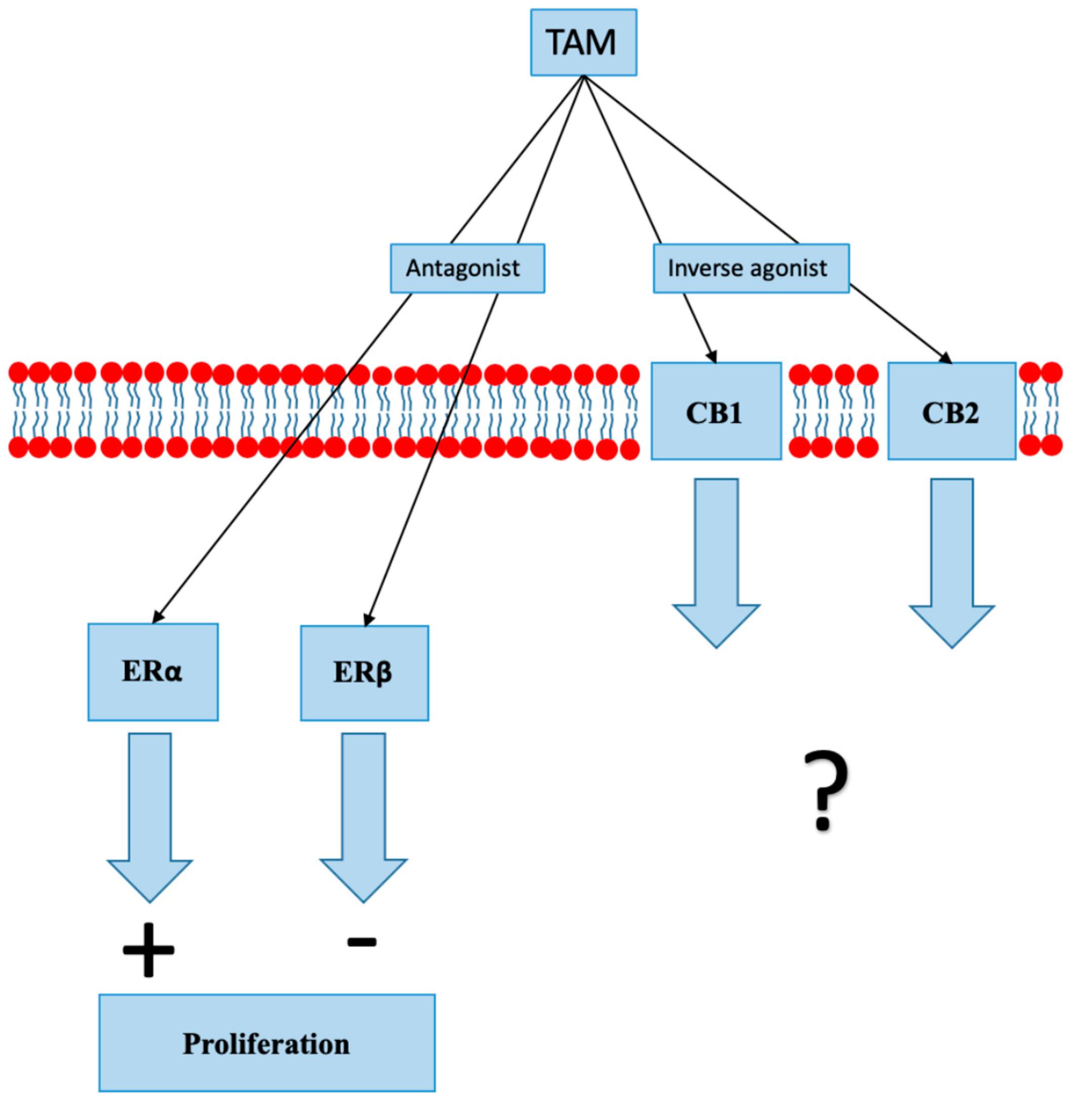 cancer receptor hormonal pozitiv